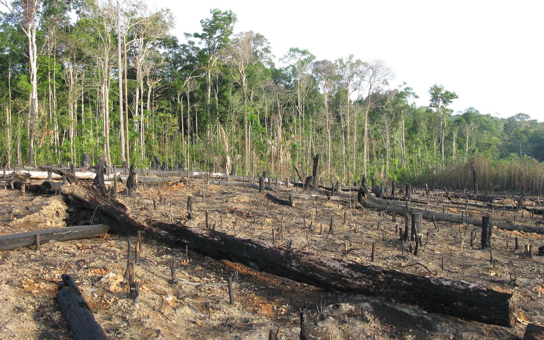 Cette année encore, la forêt amazonienne est ravagée par les incendies. © guentermanaus, Adobe Stock