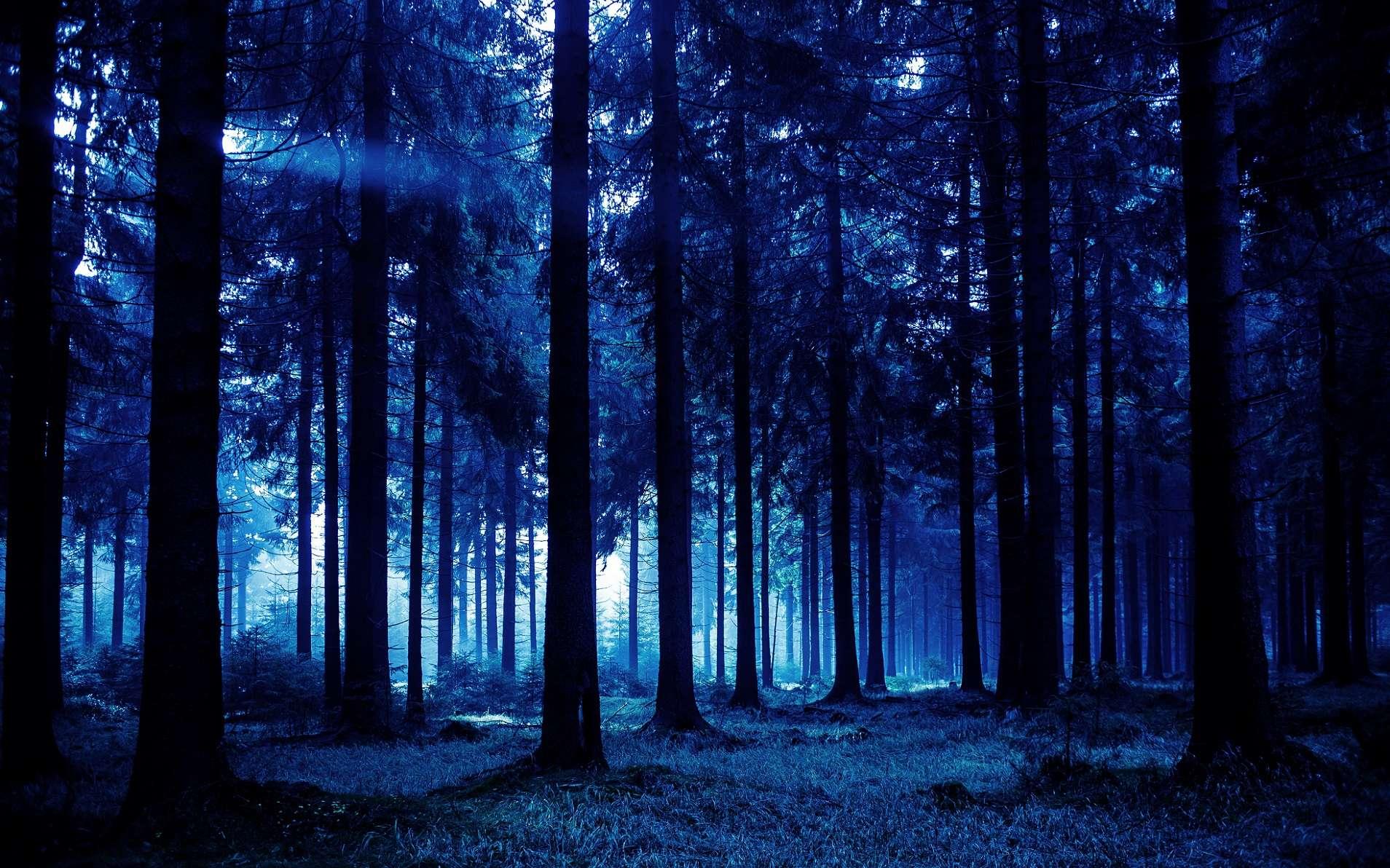 La nuit, les arbres baissent un peu leurs branches. © Val Thoermer, Shutterstock