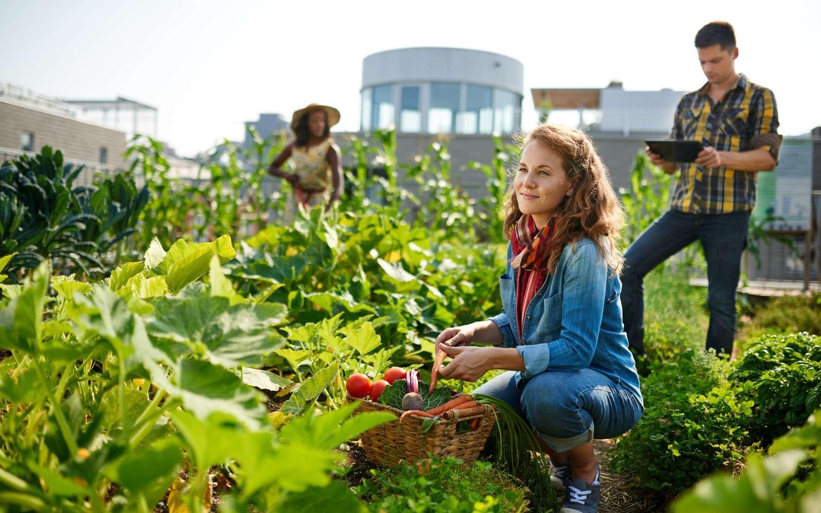 Faire pousser des légumes sur le toit des immeubles, pourquoi pas ? Le toit potager en ville aurait des avantages. © AYAimages, Fotolia