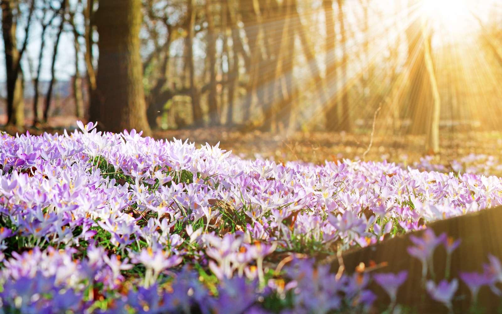 Pour les habitants de l'hémisphère nord, l'équinoxe de printemps marque le début de la saison des amours. © Thaut Images, fotolia