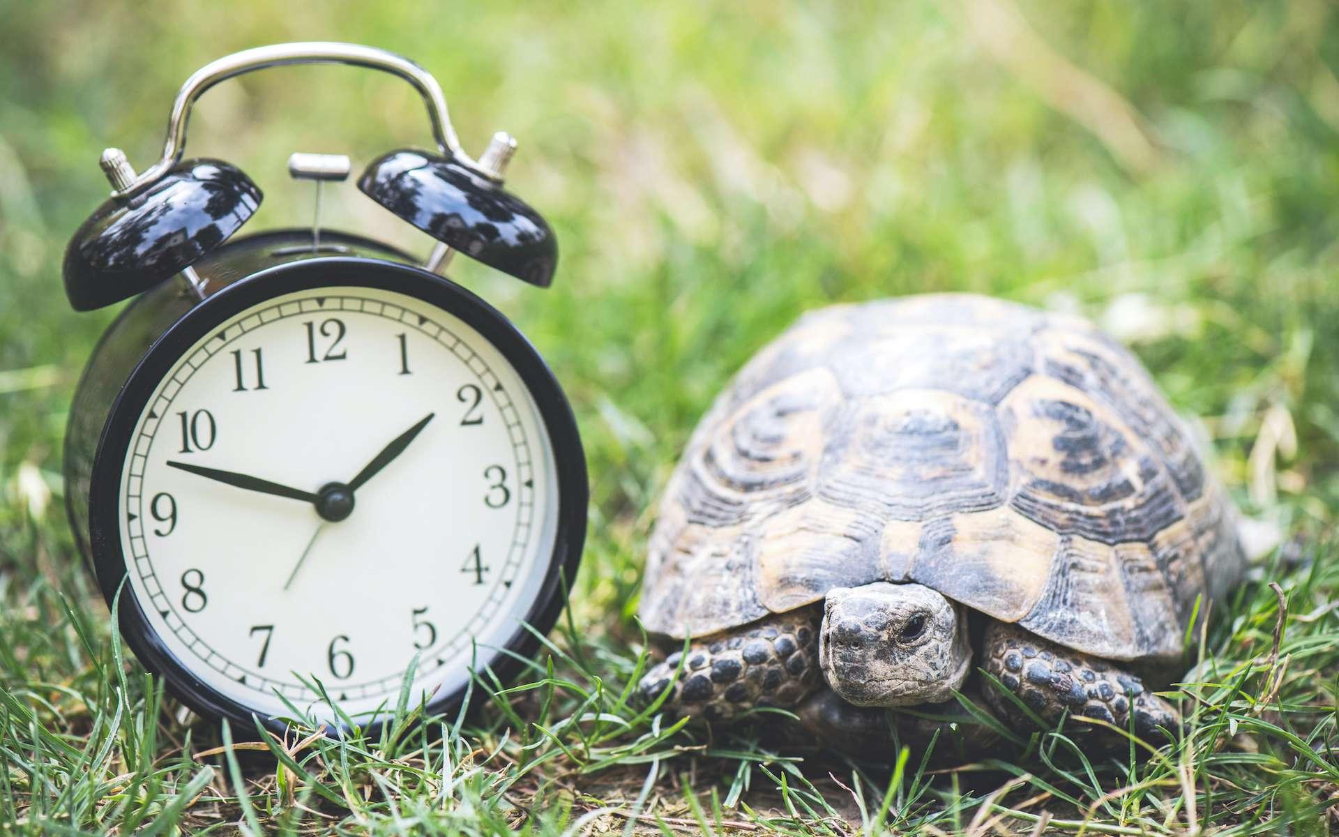 La température extérieure affecte négativement la durée de vie des animaux à sang froid. © ilkercelik, Adobe Stock