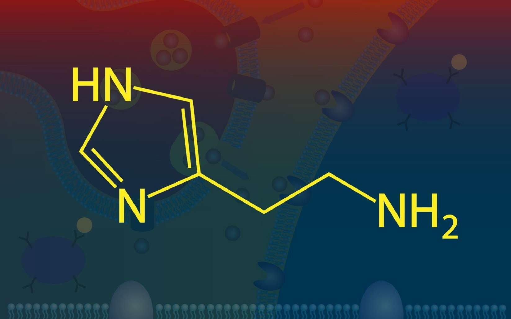 La molécule d'histamine dérive de l'histidine. © meletver, Fotolia