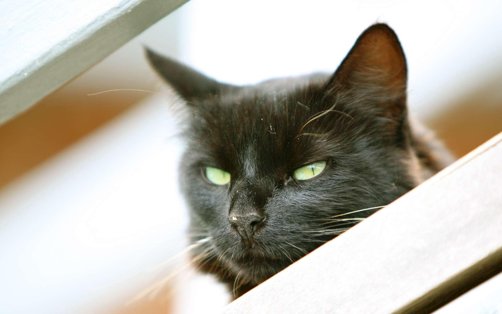Le chat est manipulateur, dominateur et véhicule de nombreuses maladies. © Steve Jurvetson, Flickr