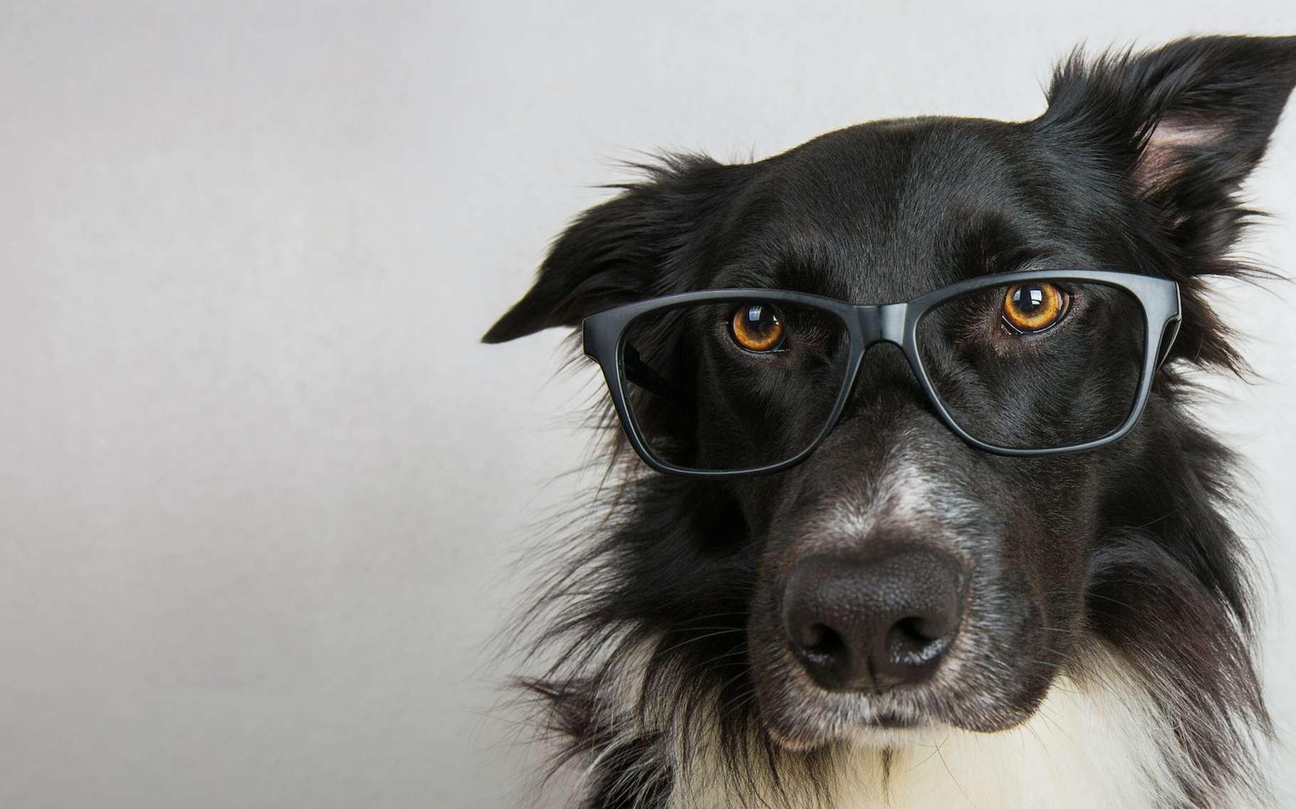 Pour mieux vivre avec son chien, il faut le comprendre. Et rien de tel que les travaux de chercheurs spécialisés pour cela. © 1STunningART, Adobe Stock
