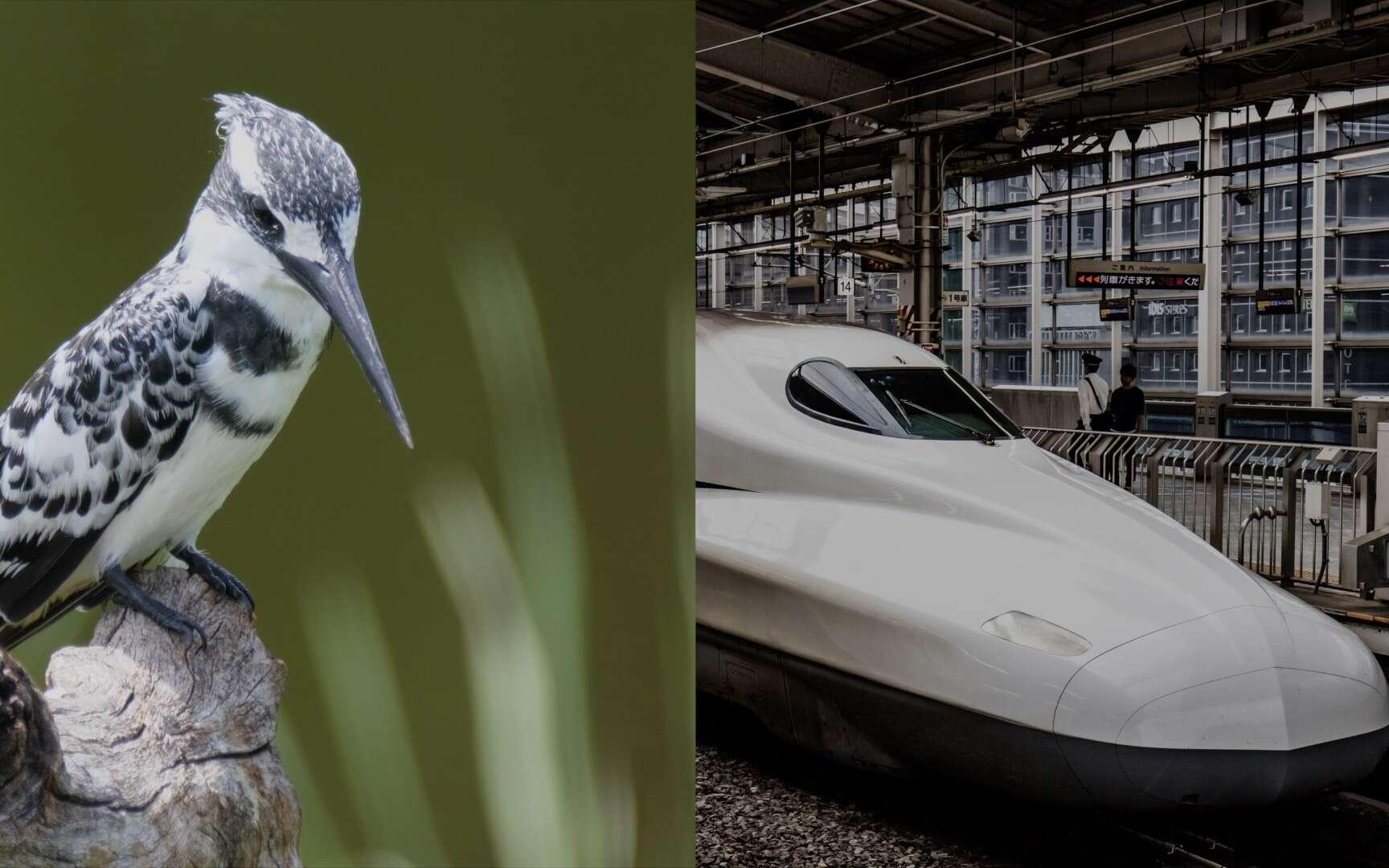 Le nez du Shinkansen est comparé au bec du martin pêcheur