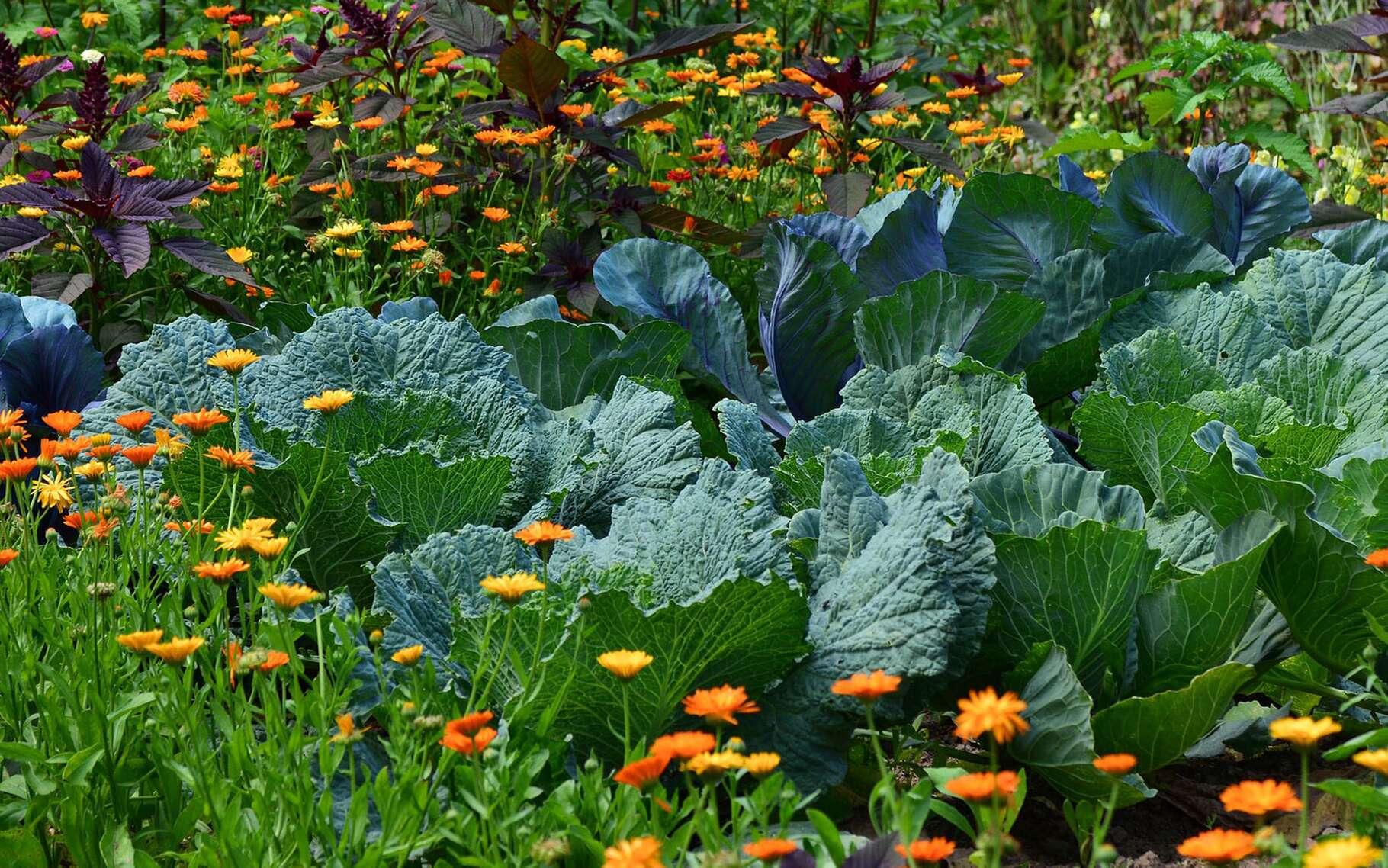 Culture Et Entretien De La Rhubarbe rotation des cultures : pourquoi changer de place vos légumes ?
