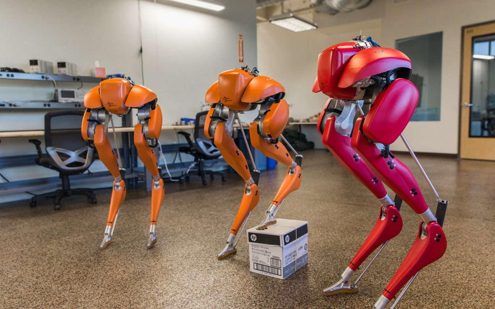 Le robot bipède Cassie a appris à marcher tout seul grâce à deux environnements virtuels. © Agility Robotics
