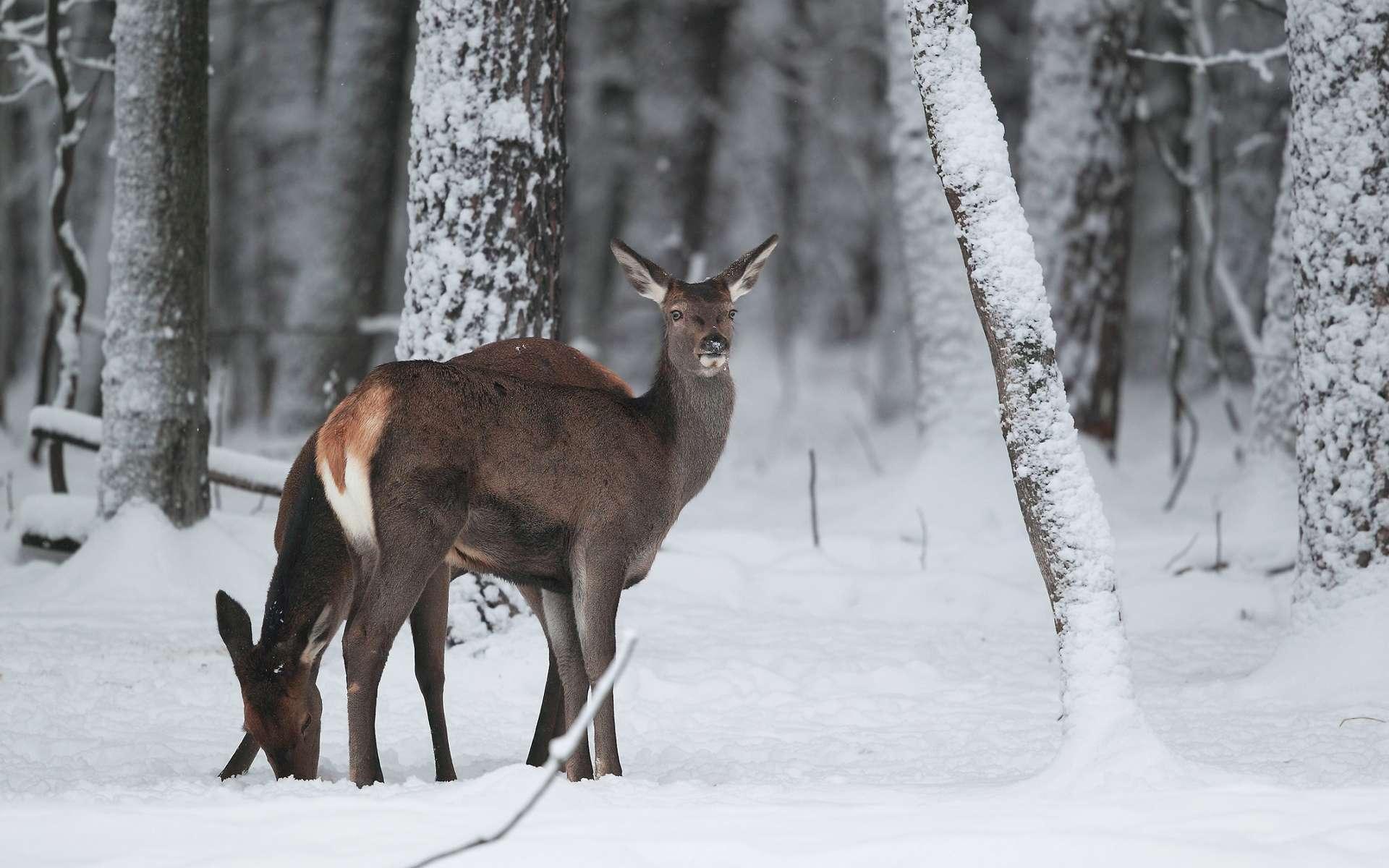 Même quand il fait froid, les mammifères doivent maintenir une température corporelle élevée par thermogenèse. © KACHALKIN OLEG, Shutterstock