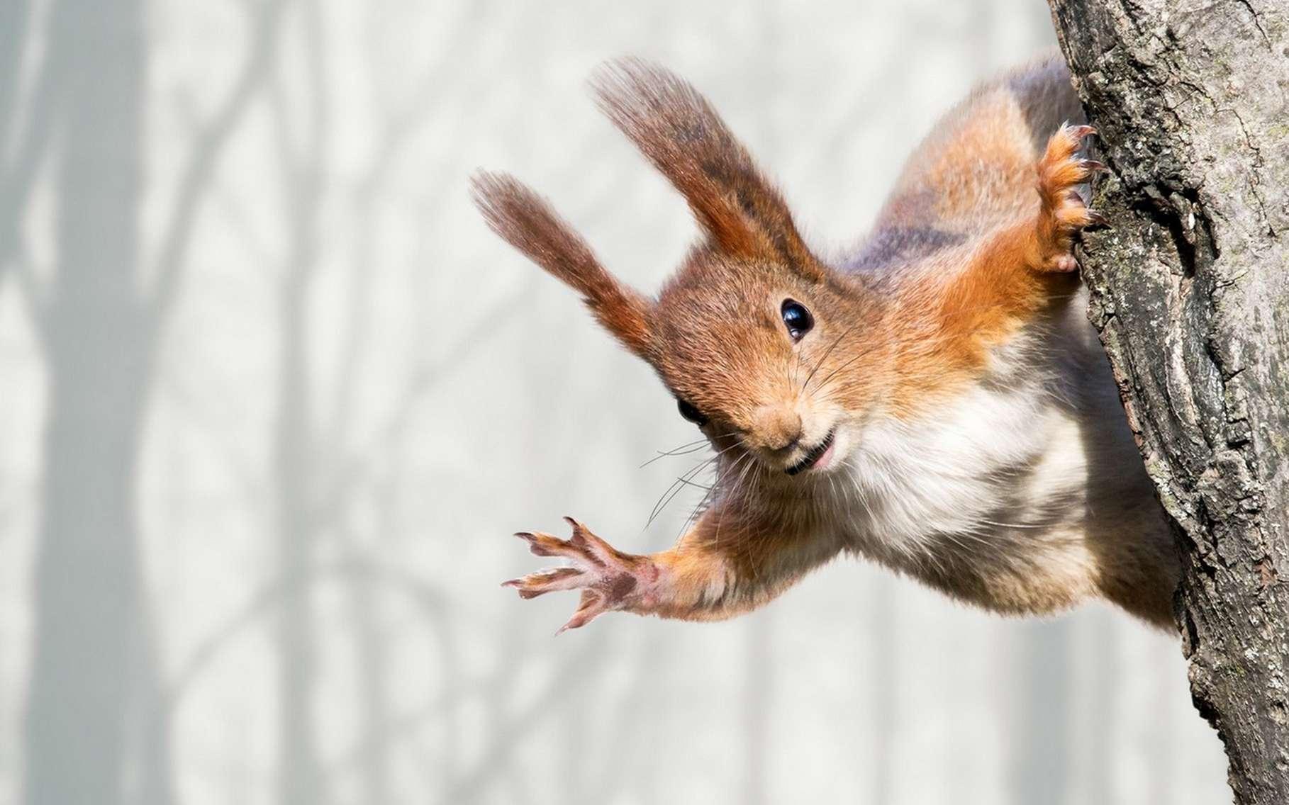 Les écureuils n'aiment pas que les noisettes. Ces rongeurs s'attaquent aussi aux câbles électriques et peuvent parfois provoquer de gros dégâts. © Mr Twister, Fotolia