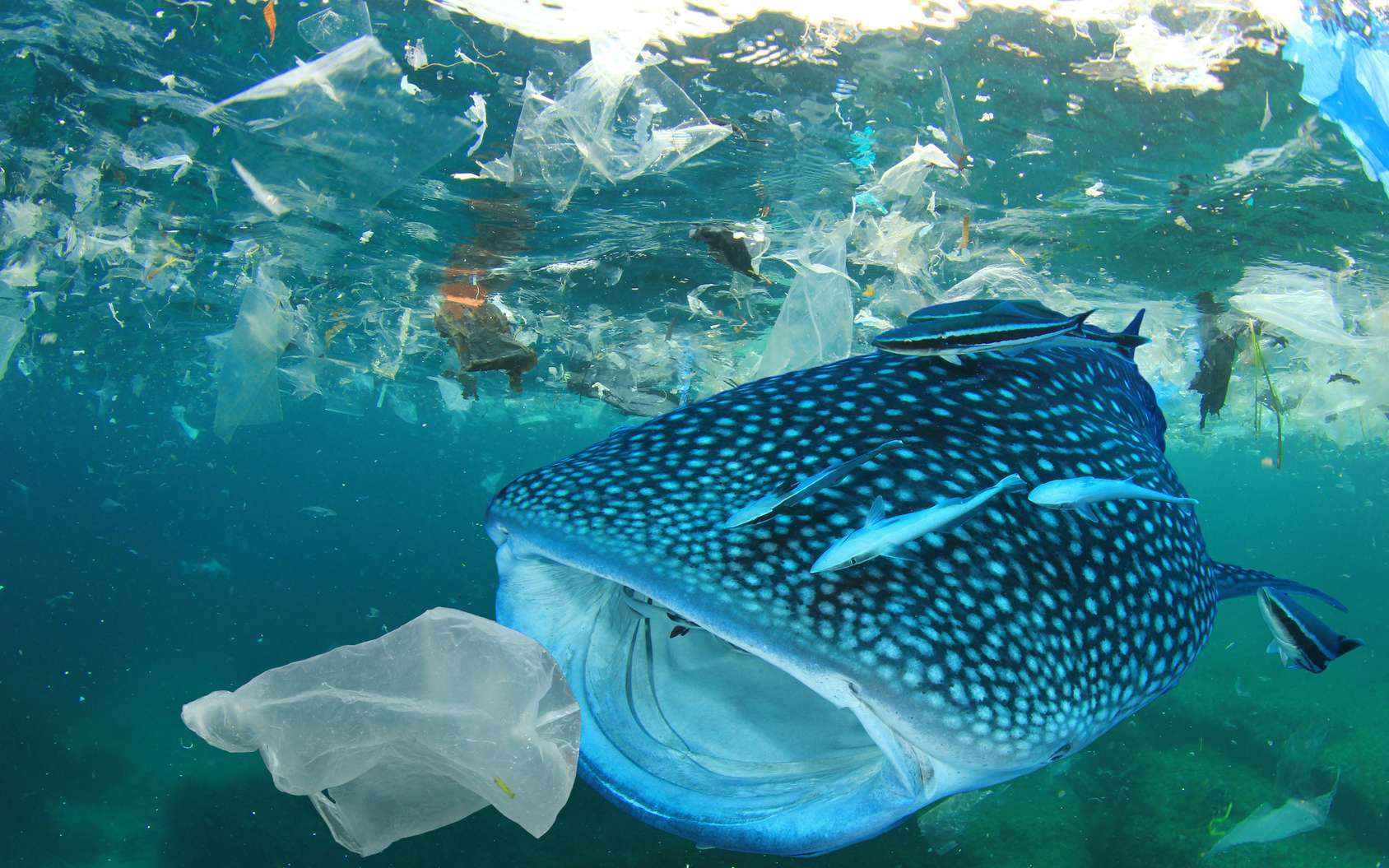 Les déchets plastique dans les océans menacent la biodiversité marine. Leur quantité pourrait doubler d'ici 2030, d'après un rapport du WWF. © Richard Carey, Fotolia