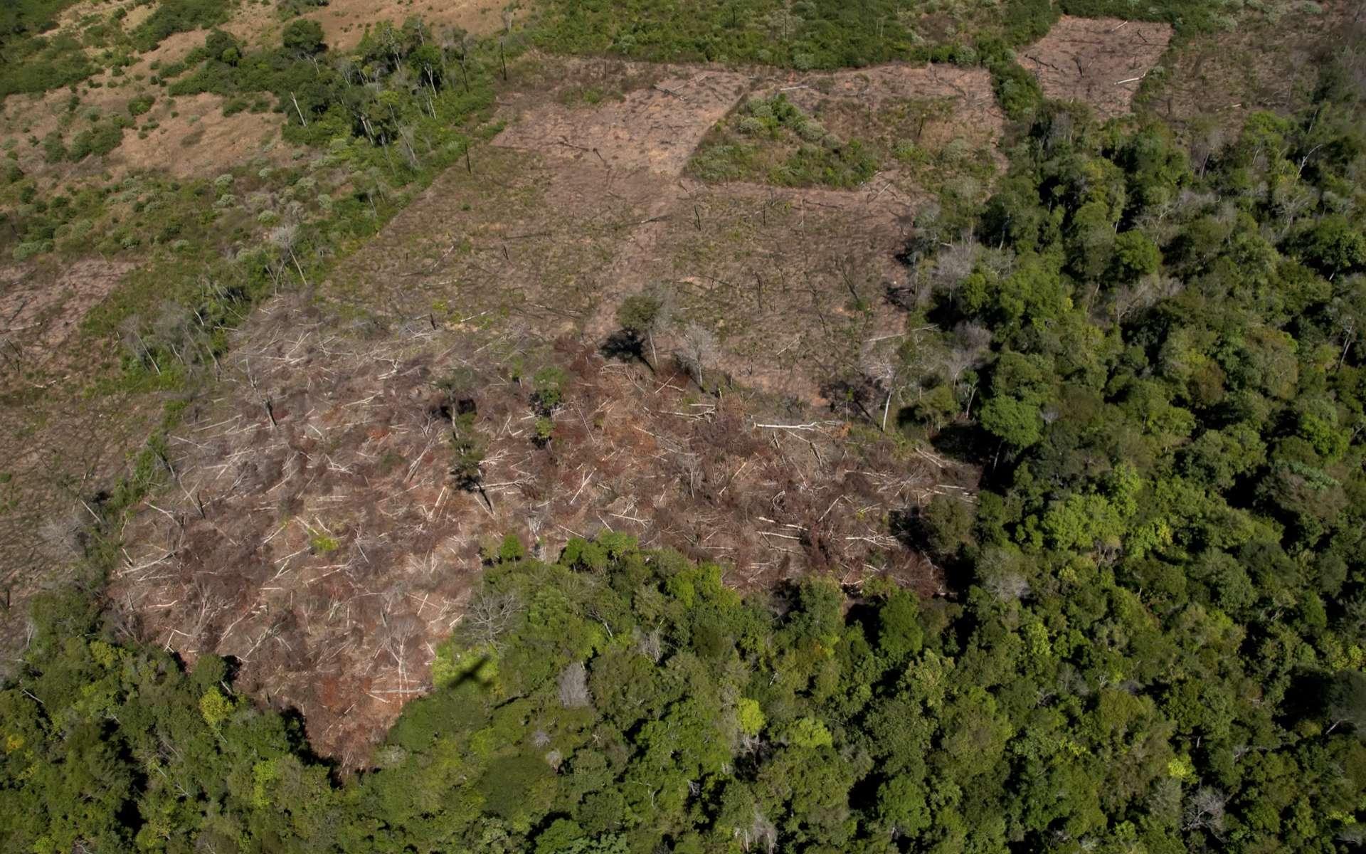 Vue aérienne de la région du Cerrado déboisée. © Pulsar Imagens, Adobe Stock