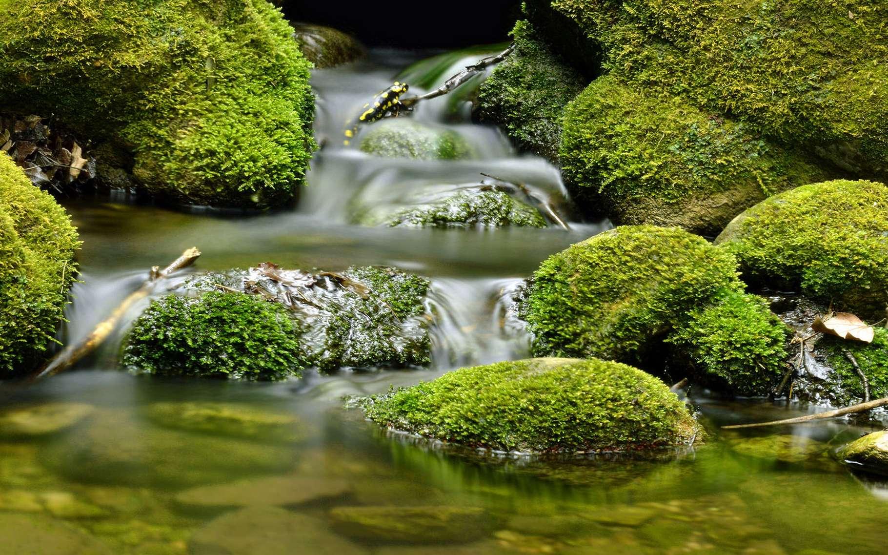 des photos de la nature