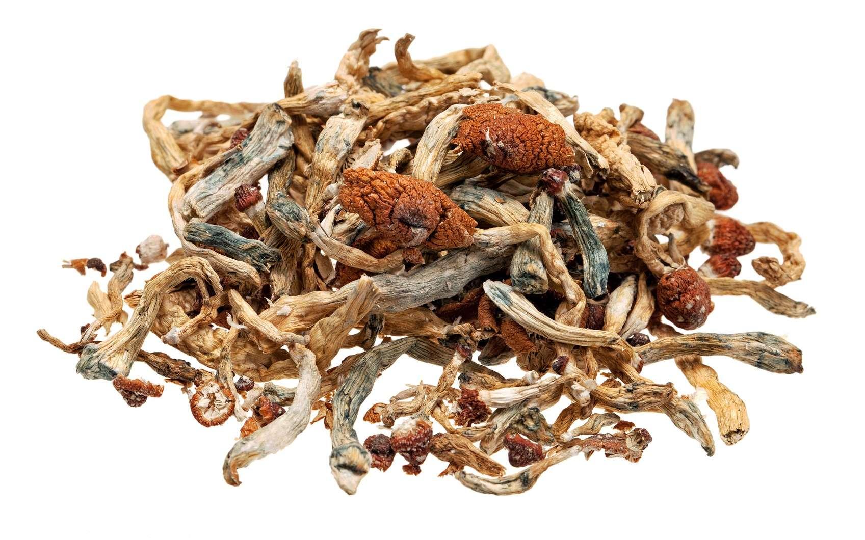 La psilocybine est la principale substance psychoactive présente dans les « champignons magiques ». © robtek, Fotolia