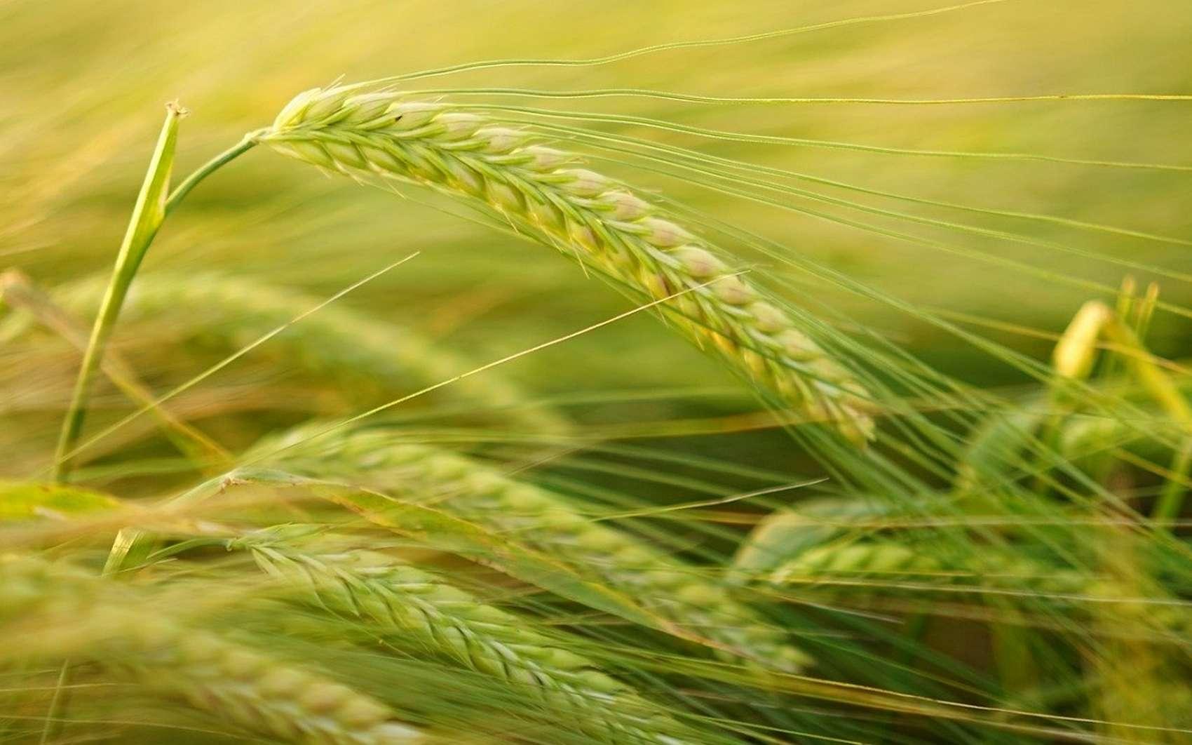 Les principes de la permaculture © Hans by Pixabay