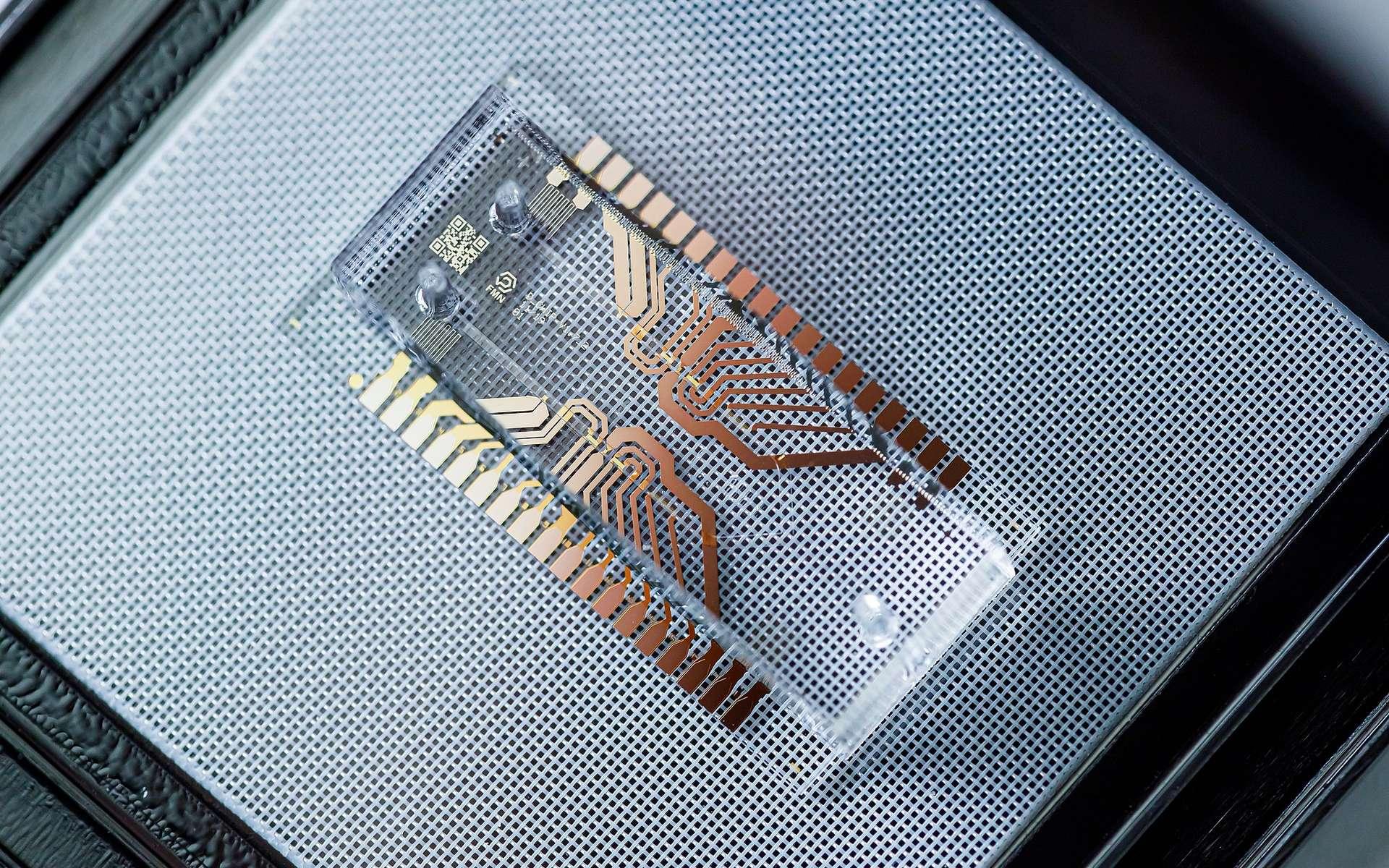 Une puce microfluidique pour le diagnostic médical. © FMNLab, Wikimedia Commons