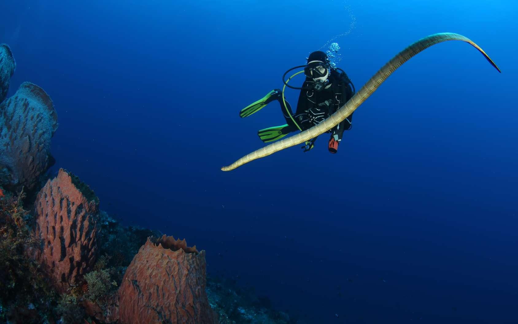 Pour boire de l'eau, le serpent de mer, s'il sait s'y prendre, peut profiter de la pluie. © Valerijs Novickis, Fotolia