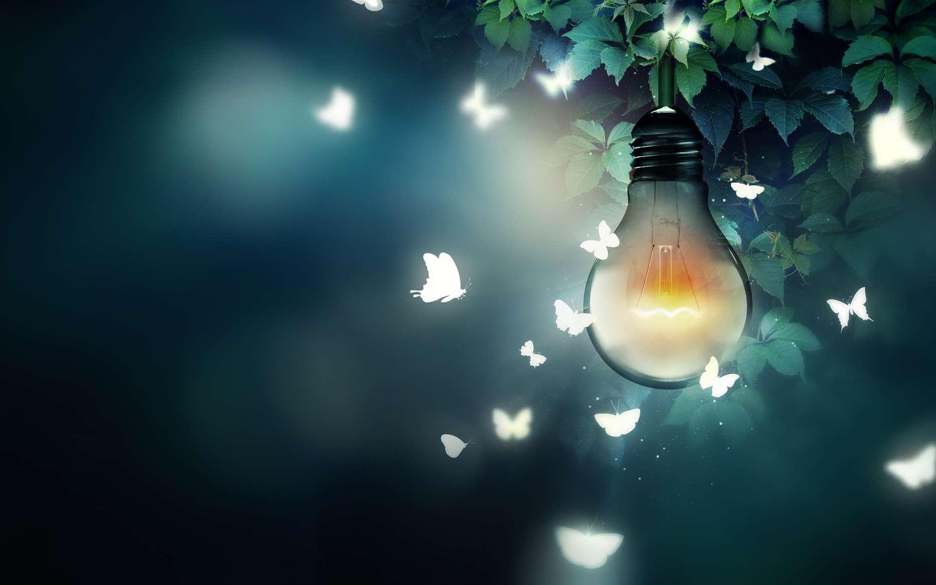 La pollution lumineuse menace la pollinisation. Les papillons de nuit sont des pollinisateurs de plantes qui représentent aussi une source de nourriture pour les pollinisateurs de jour. © Zffoto, Fotolia