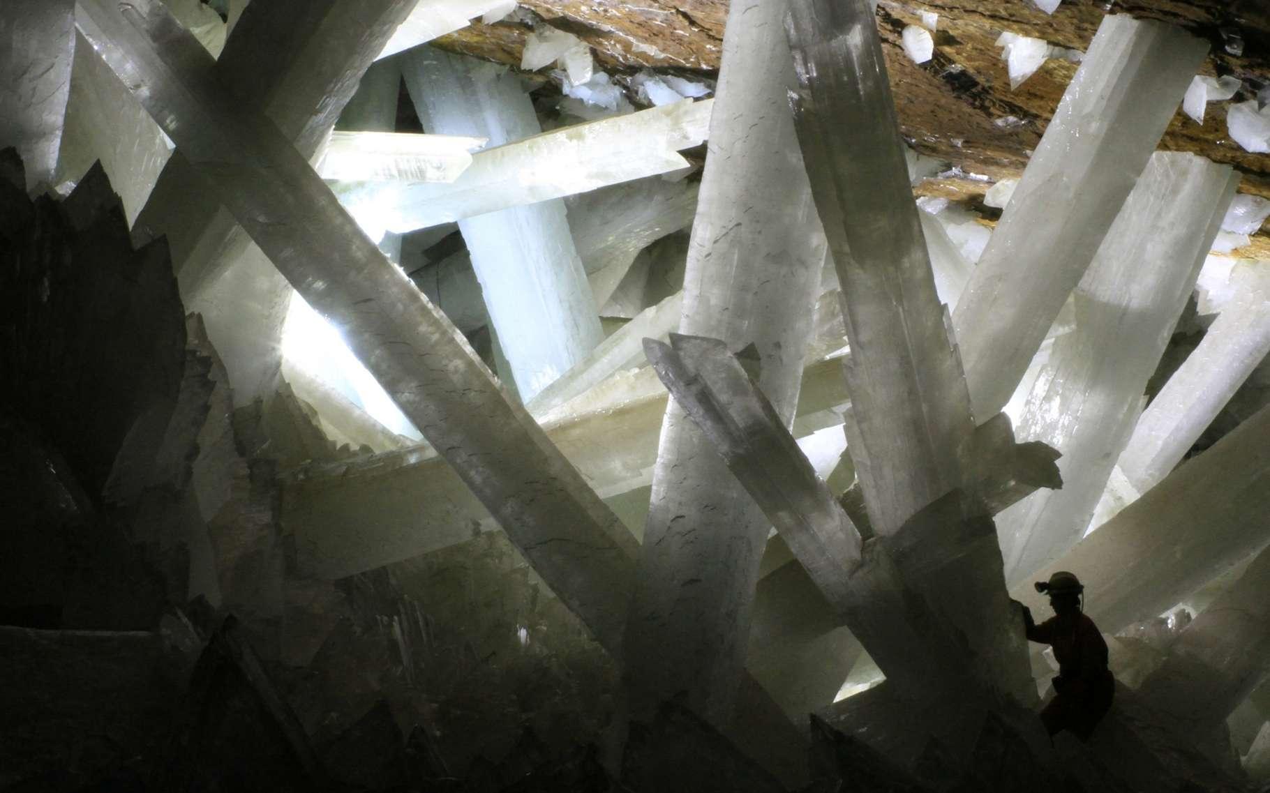 Des cristaux longs de plusieurs mètres ont lentement poussé dans ces grottes noyées d'eau, au Mexique. Après l'assèchement par pompage pour exploiter le plomb, l'argent et le cuivre qui s'y trouvent, ces structures géantes de gypse ont cessé de grandir et les scientifiques y découvrent des inclusions contenant des restes de pollens, témoins d'une végétation disparue, et même des bactéries dormantes. © Rob Lavinsky, licence Creative Wikimedia Commons CC BY-SA 3.0