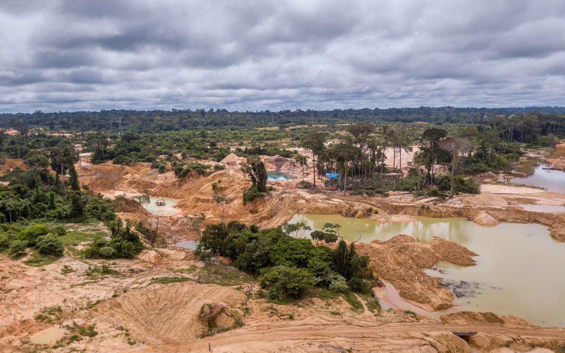 La déforestation en Amazonie brésilienne a plus de doublé en janvier 2020 par rapport au mois de janvier 2019. © Whitcomberd, Adobe Stock© Imago Photo, Adobe Stock