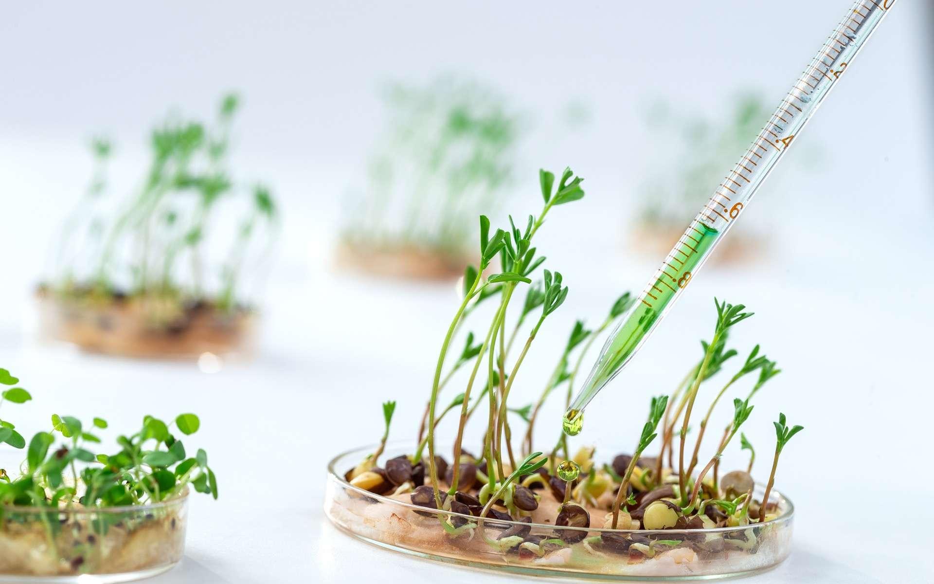 Une plante transgénique a vu son patrimoine génétique modifié de façon artificielle par l'Homme. © JPC-PROD, Adobe Stock