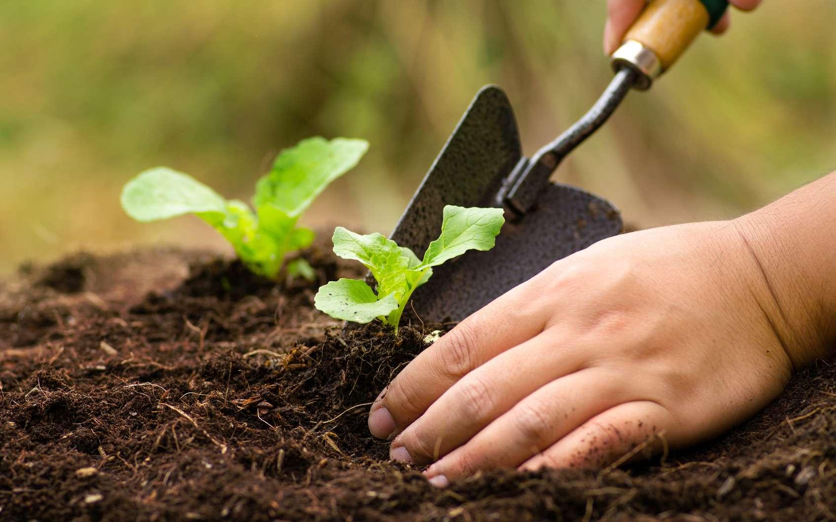 Le jardinage ne nécessite pas forcément l'utilisation de pesticides. © singkham, Fotolia