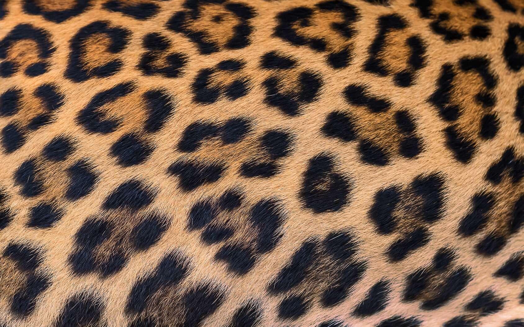 Quiz : les taches des animaux en 10 questions. © ake, Fotolia