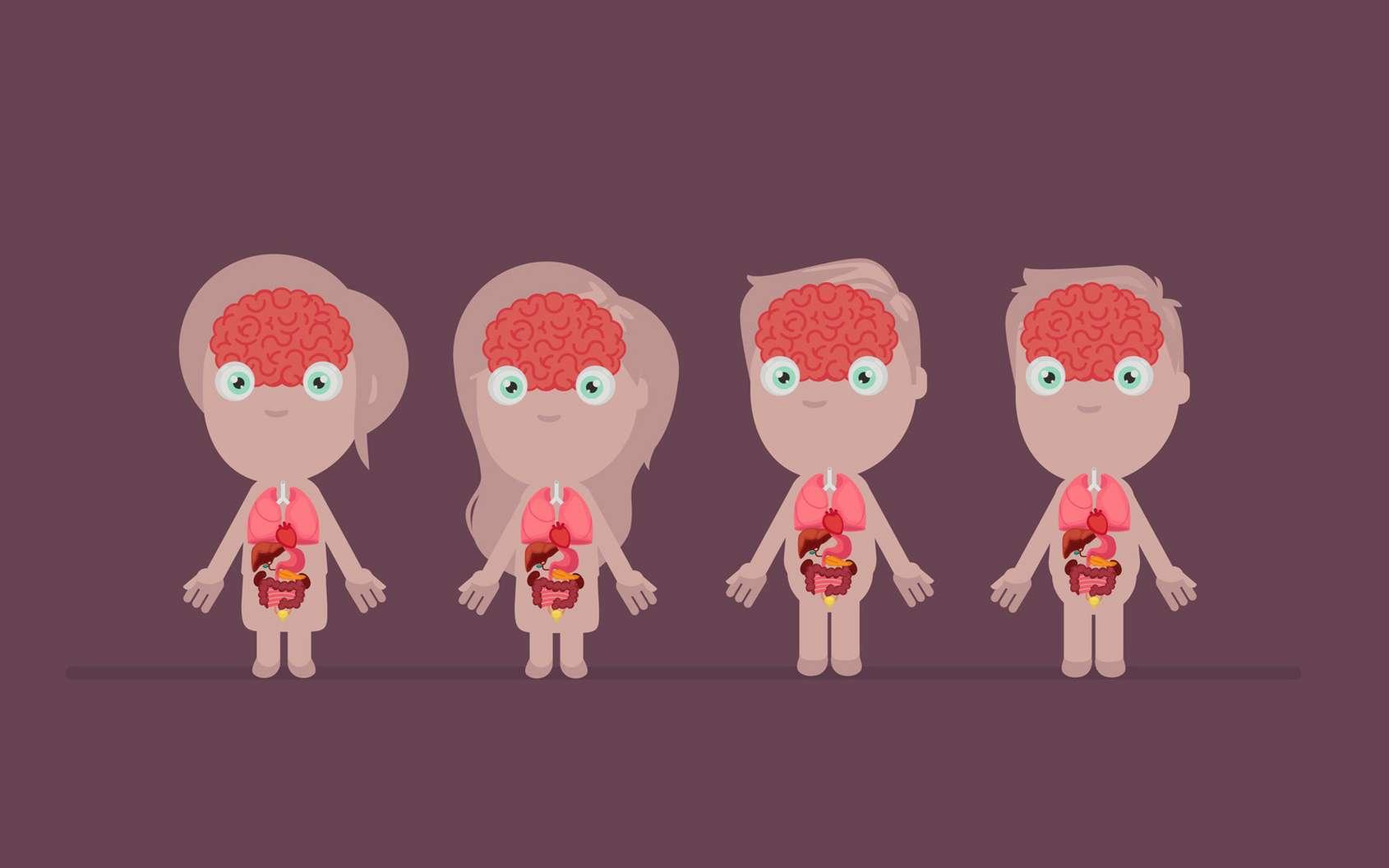 Parmi les 79 organes du corps humain, lesquels ne sont pas indispensables ? © baluchis, Fotolia