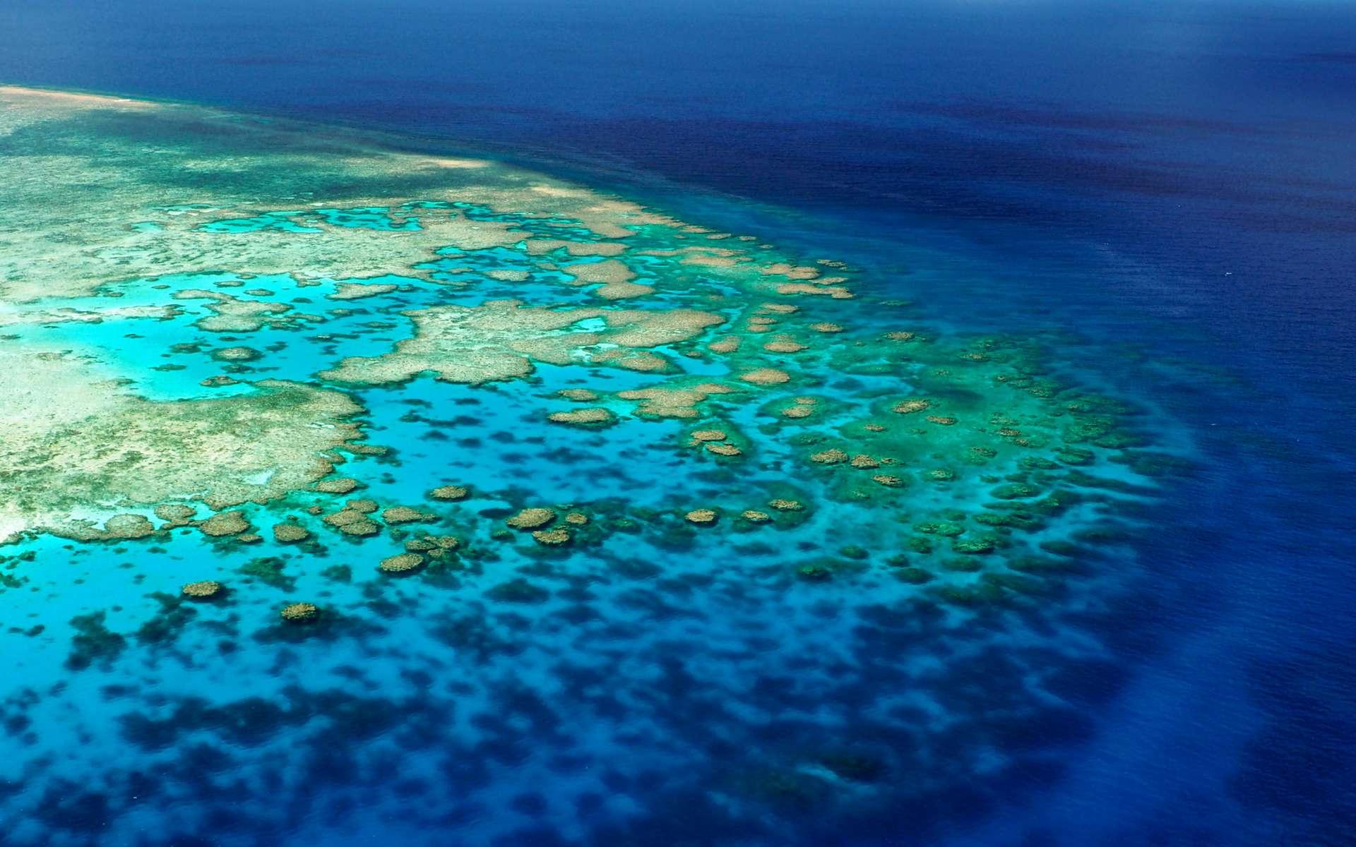 Les coraux peuvent forment des paysages sous-marins visibles à de très longues distances, comme ici au niveau de la Grande Barrière de corail australienne. © Coral_Brunner, Adobe Stock
