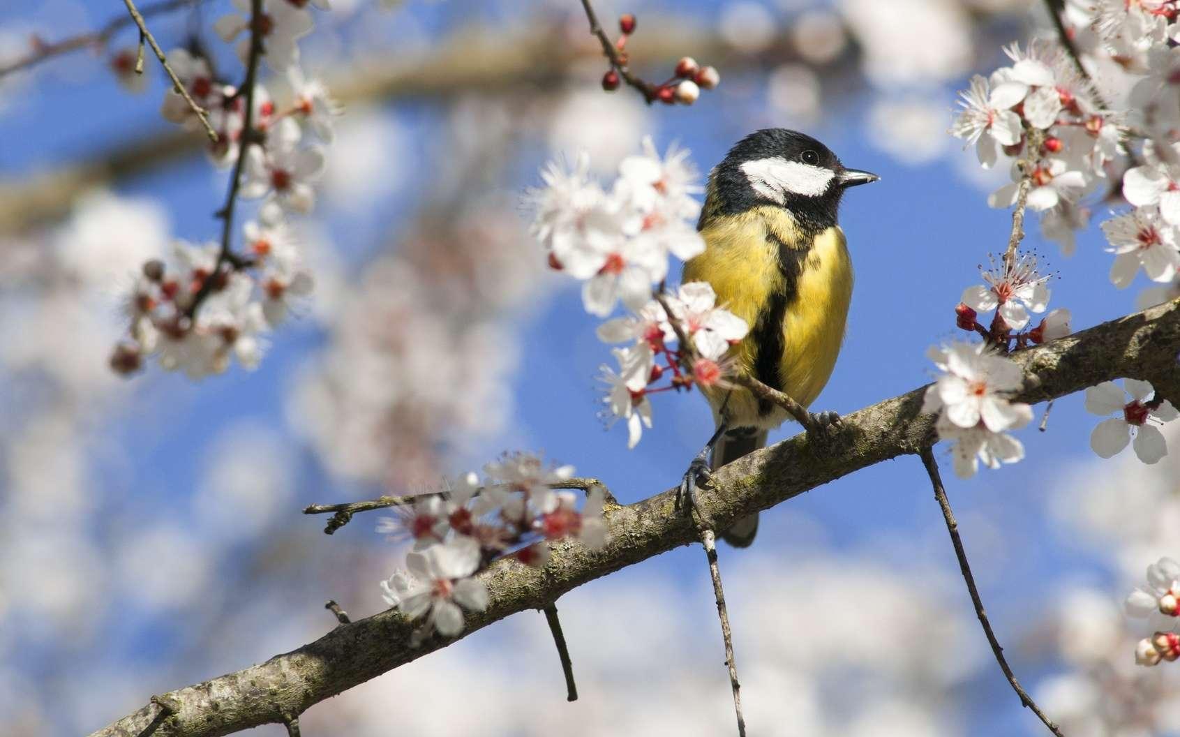 Ce printemps, les oiseaux manquent à l'appel… © mobilise248, Fotolia