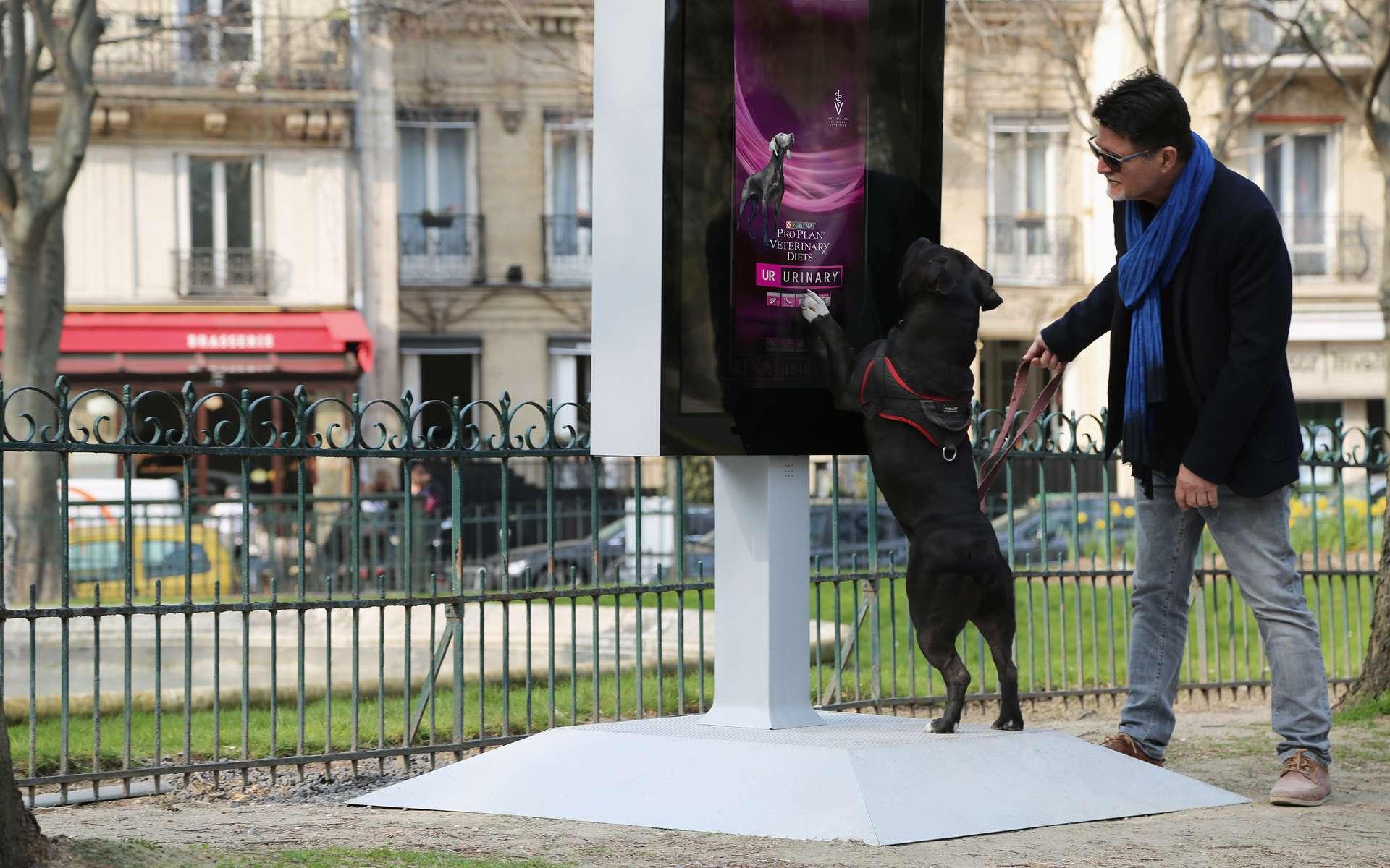 Le panneau Street-Vet analyse l'urine des chiens pour offrir un bilan de santé. © Purina Pro Plan