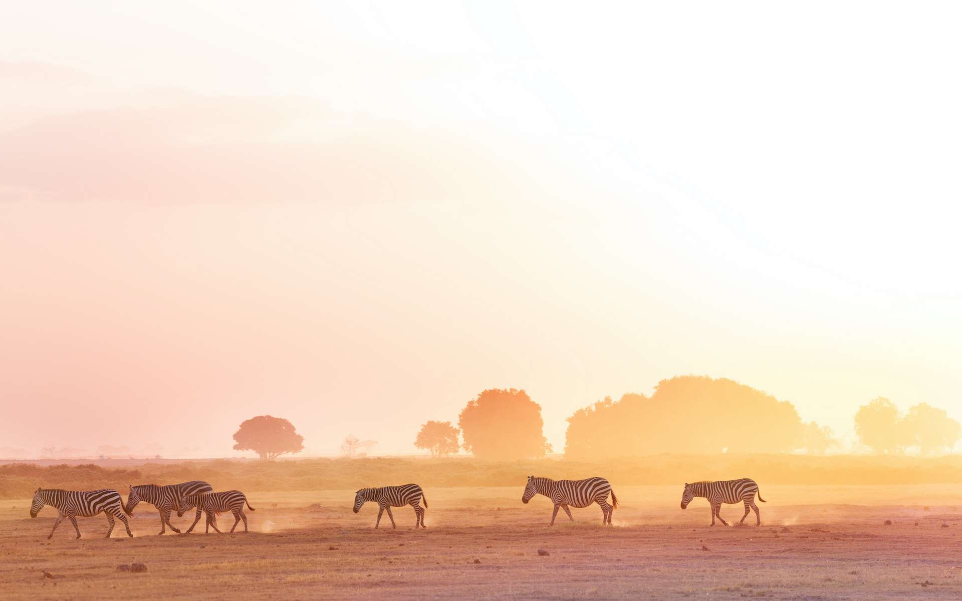Certains animaux parcourent chaque année des milliers de kilomètres. © Sergey Novikov, Adobe Stock