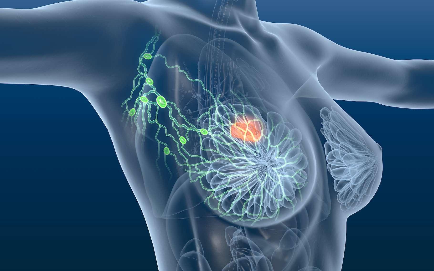 Le mois d'Octobre est consacré à la lutte contre le cancer du sein. © Axel Kock, Adobe Stock