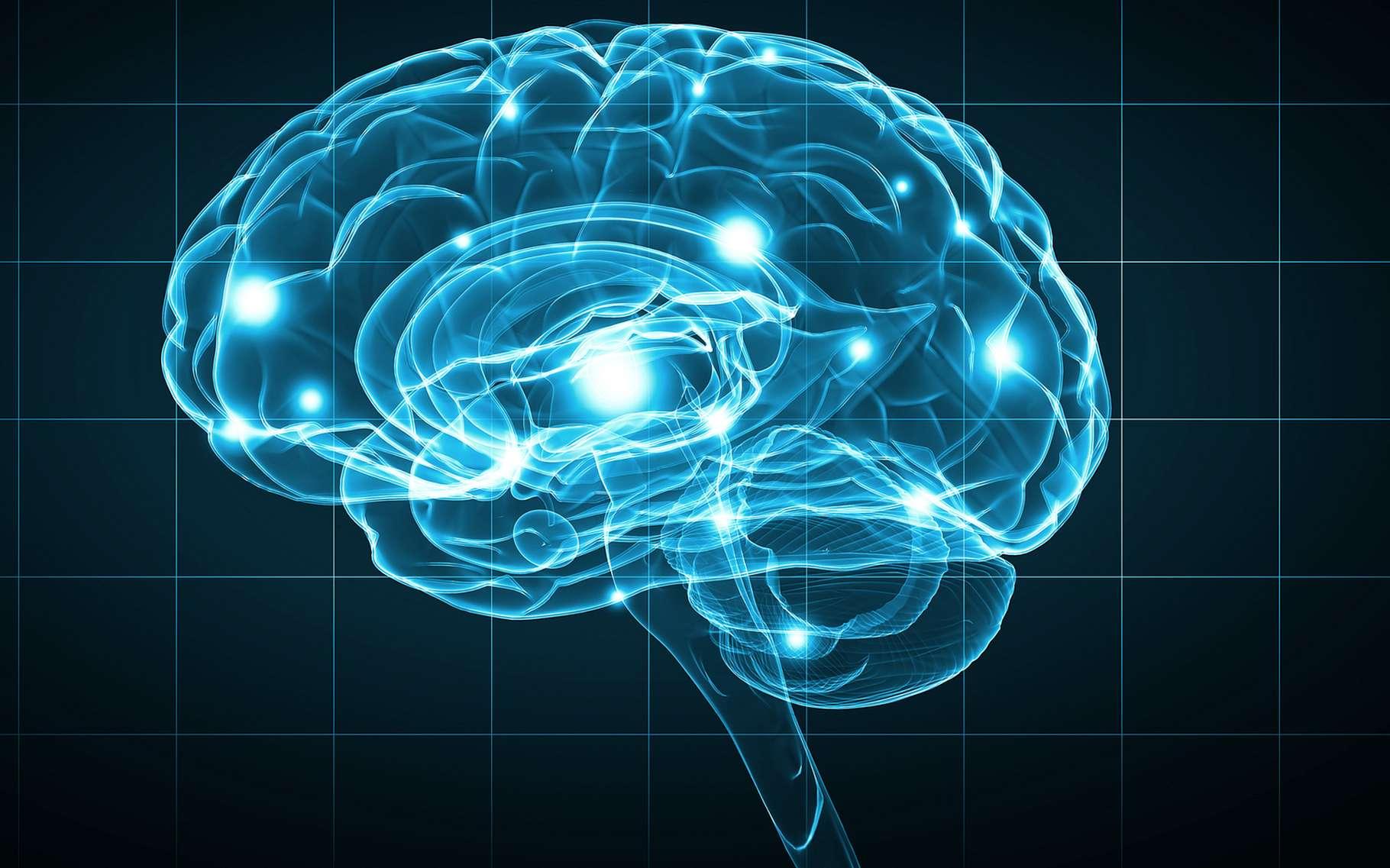 Une étude menée par l'Université d'Adélaïde en Australie apporte un nouvel éclairage sur l'intelligence humaine. © Sergey Nivens, Shutterstock