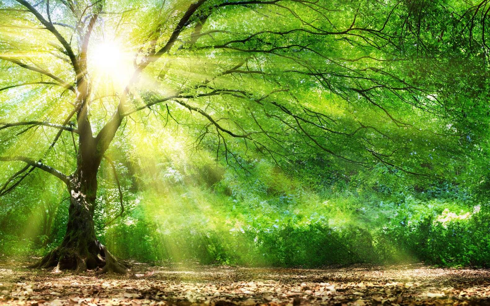 L'Intelligence des arbres, un documentaire stupéfiant. © Romolo Tavani