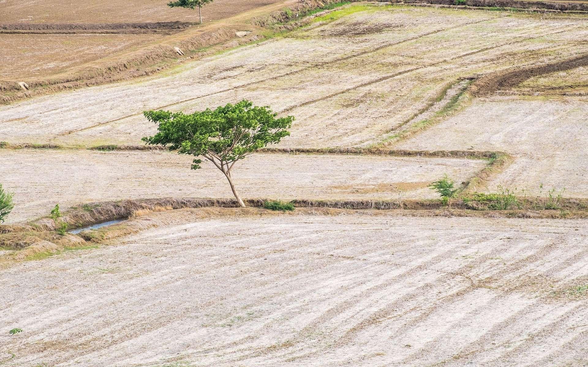 La sécheresse extrême qui a frappé la Syrie au cours des années 2000 a dévasté le secteur agricole et fait des milliers de déplacés. Une étude montre qu'elle fut 10 à 20 % plus intense que la plus terrible des sécheresses de ces neuf derniers siècles. © Mumemories, shutterstock.com