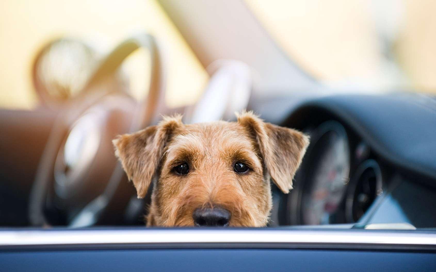 Les Tesla vont bientôt pouvoir prendre soin d'un animal resté enfermé. © DoraZett