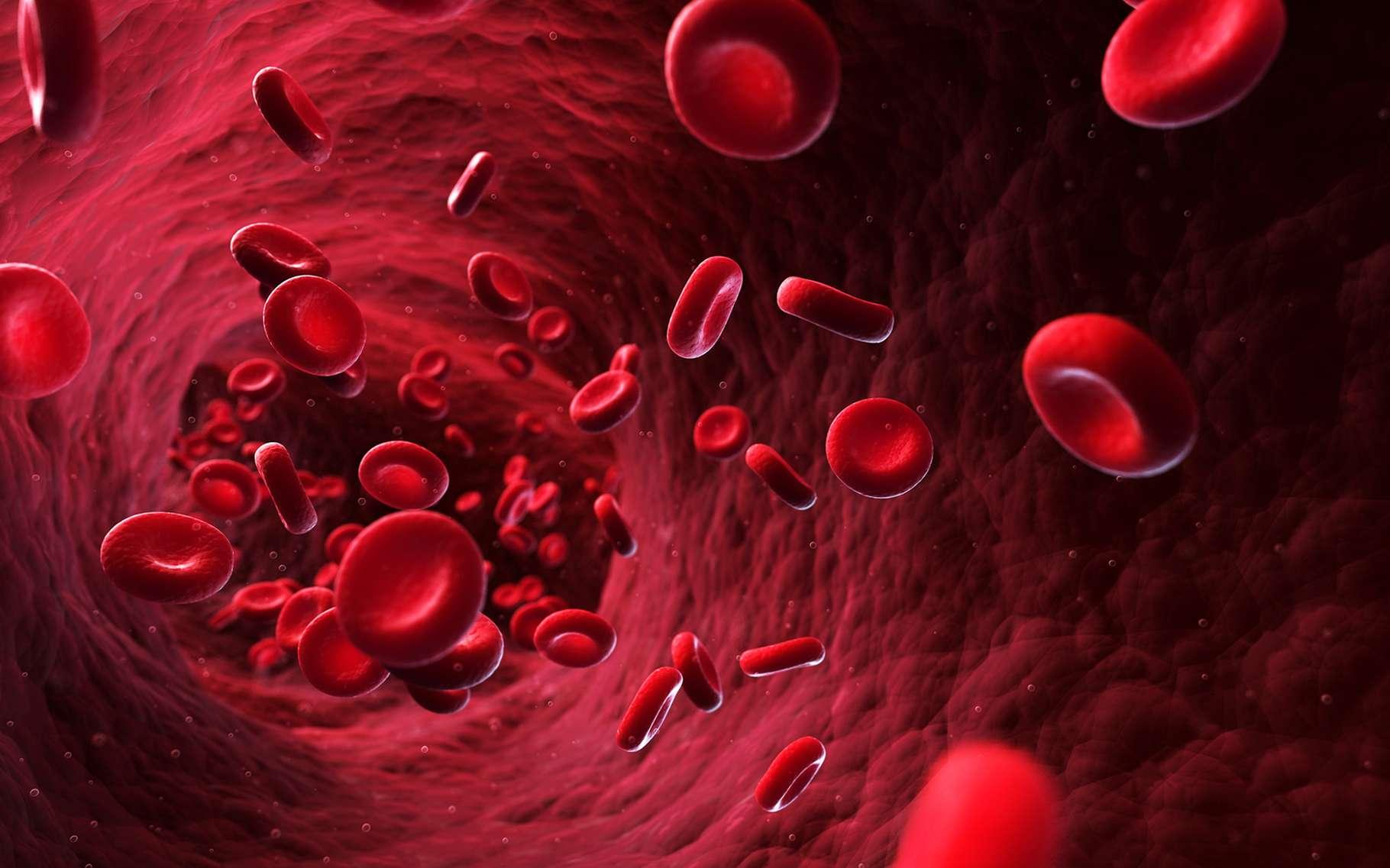 Le taux d'hématocrite se visualise par la proportion du volume de globules rouges par rapport au volume total du sang. © Sebastian Kaulitzki, Shutterstock