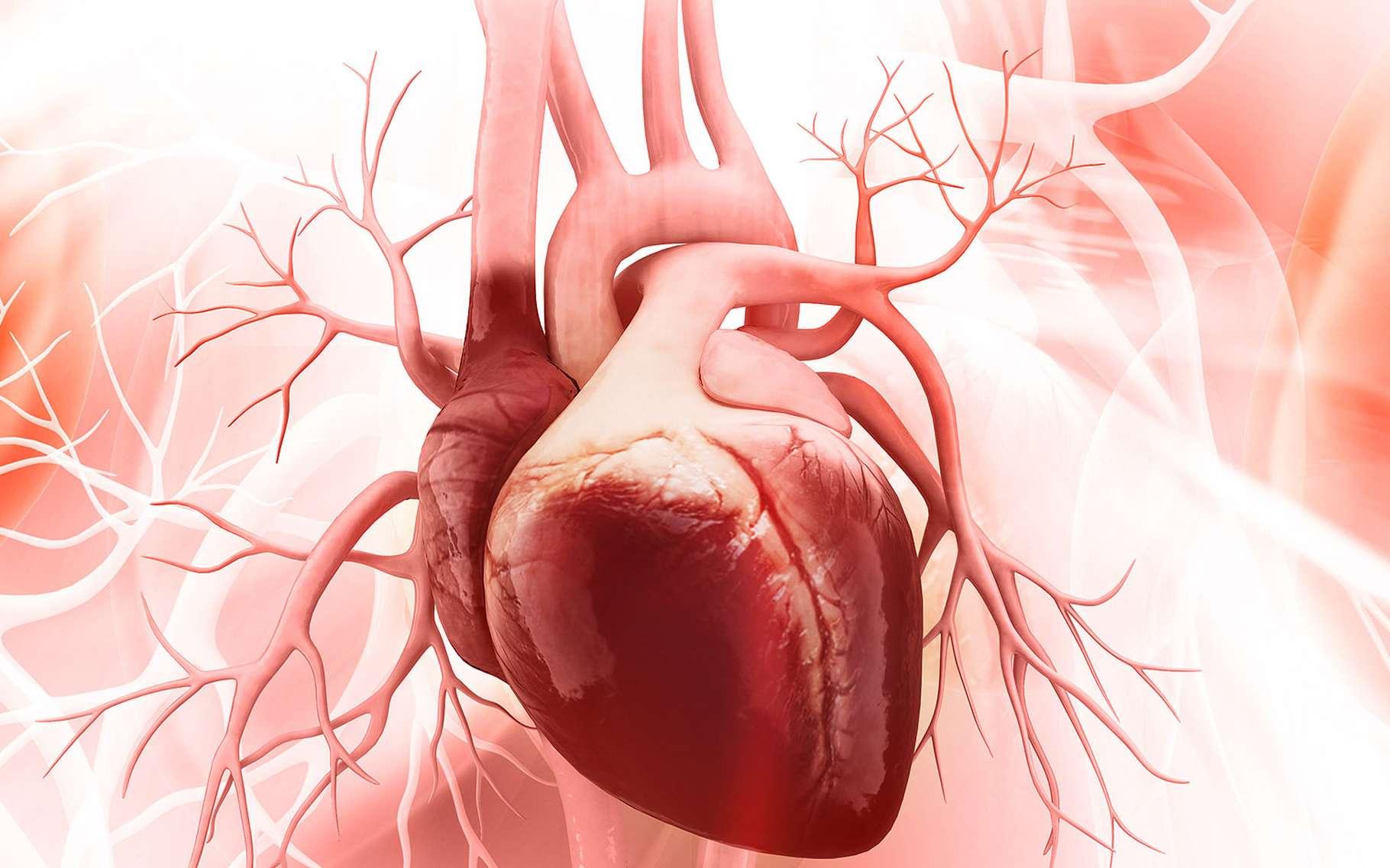 Le cœur, organe de vie | Dossier