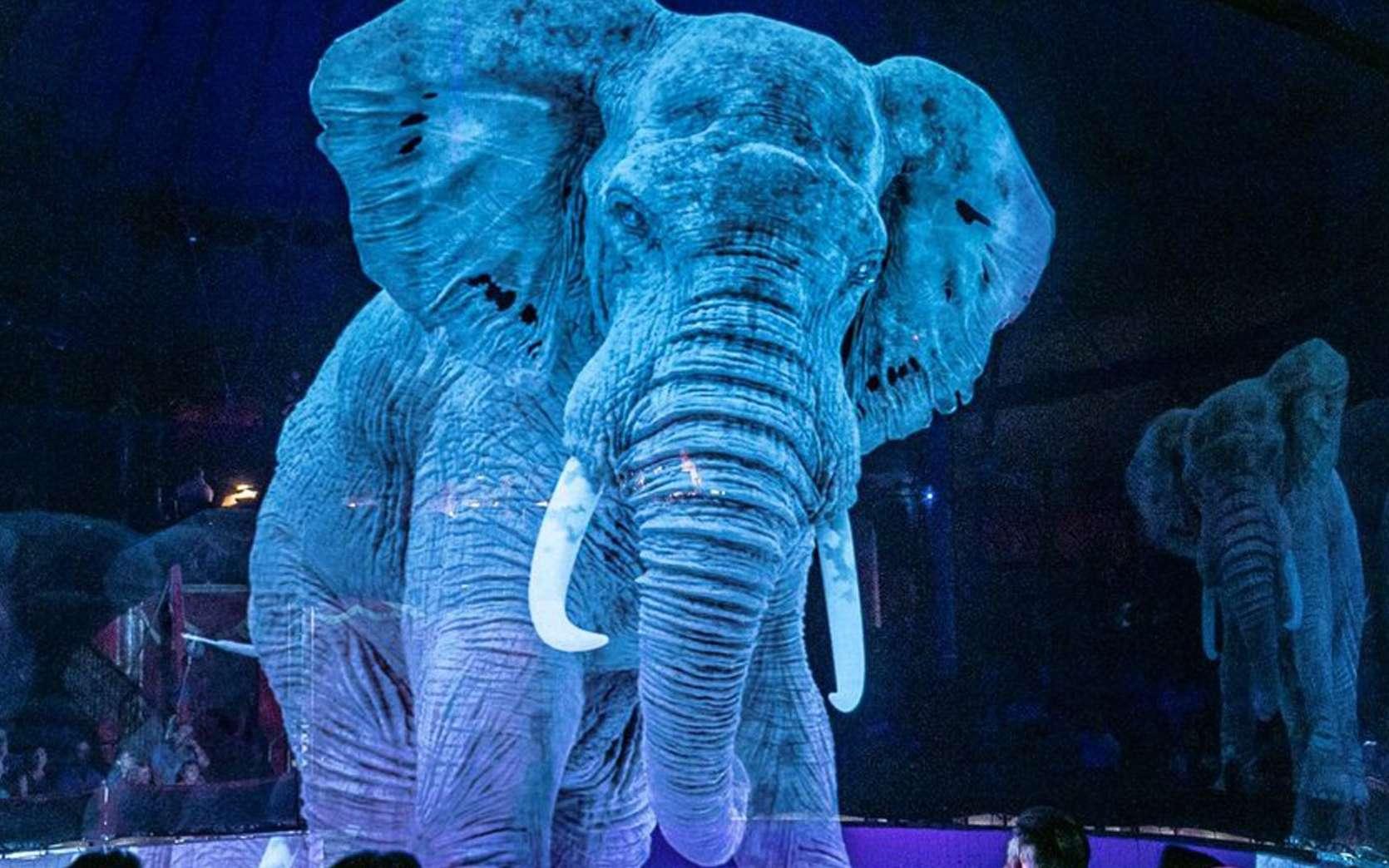 Les animaux holographiques du cirque Roncalli. © Cirque Roncalli