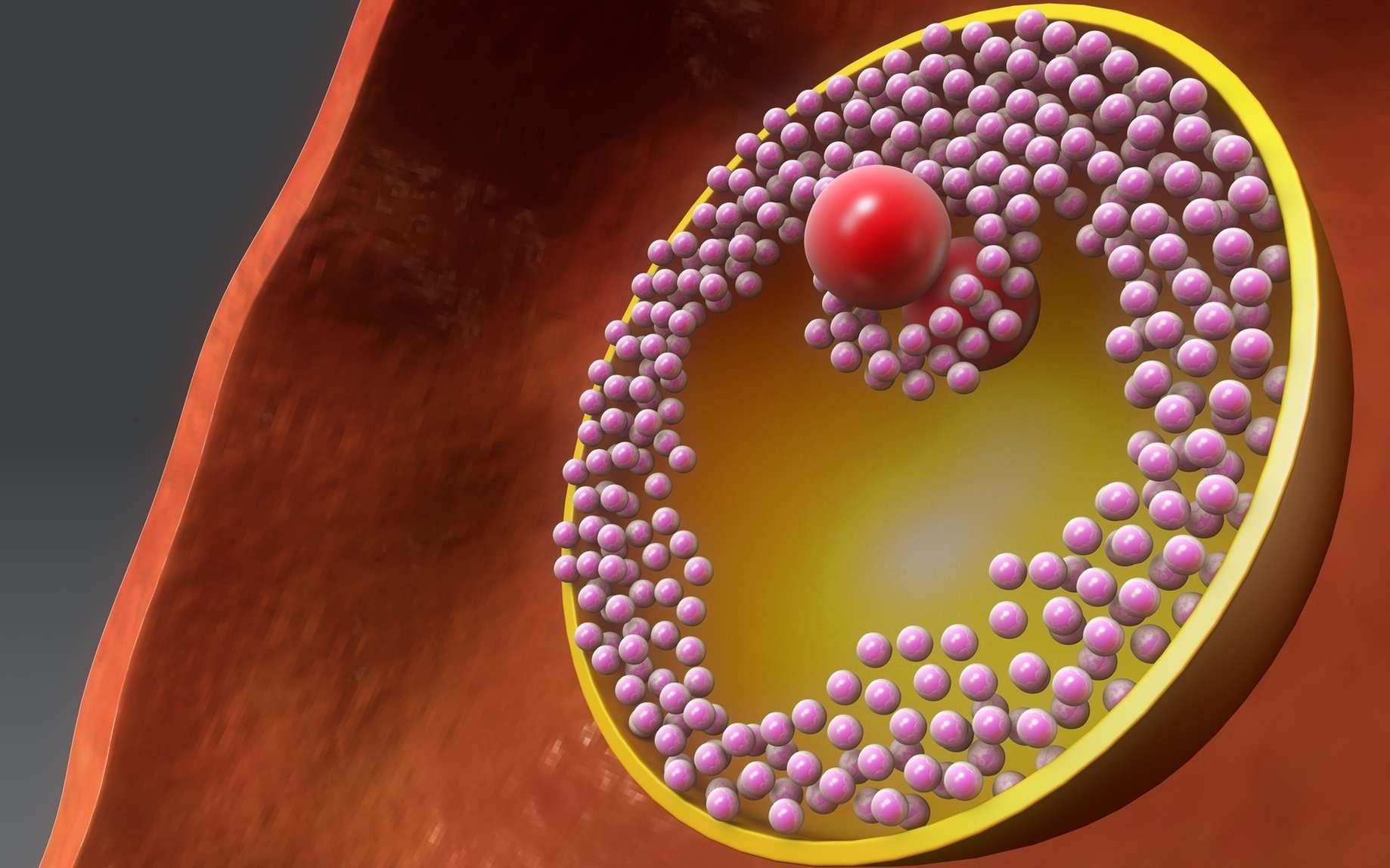 Les cellules de la granulosa sont des cellules folliculaires qui entourent l'ovocyte. © 7activestudio, Fotolia