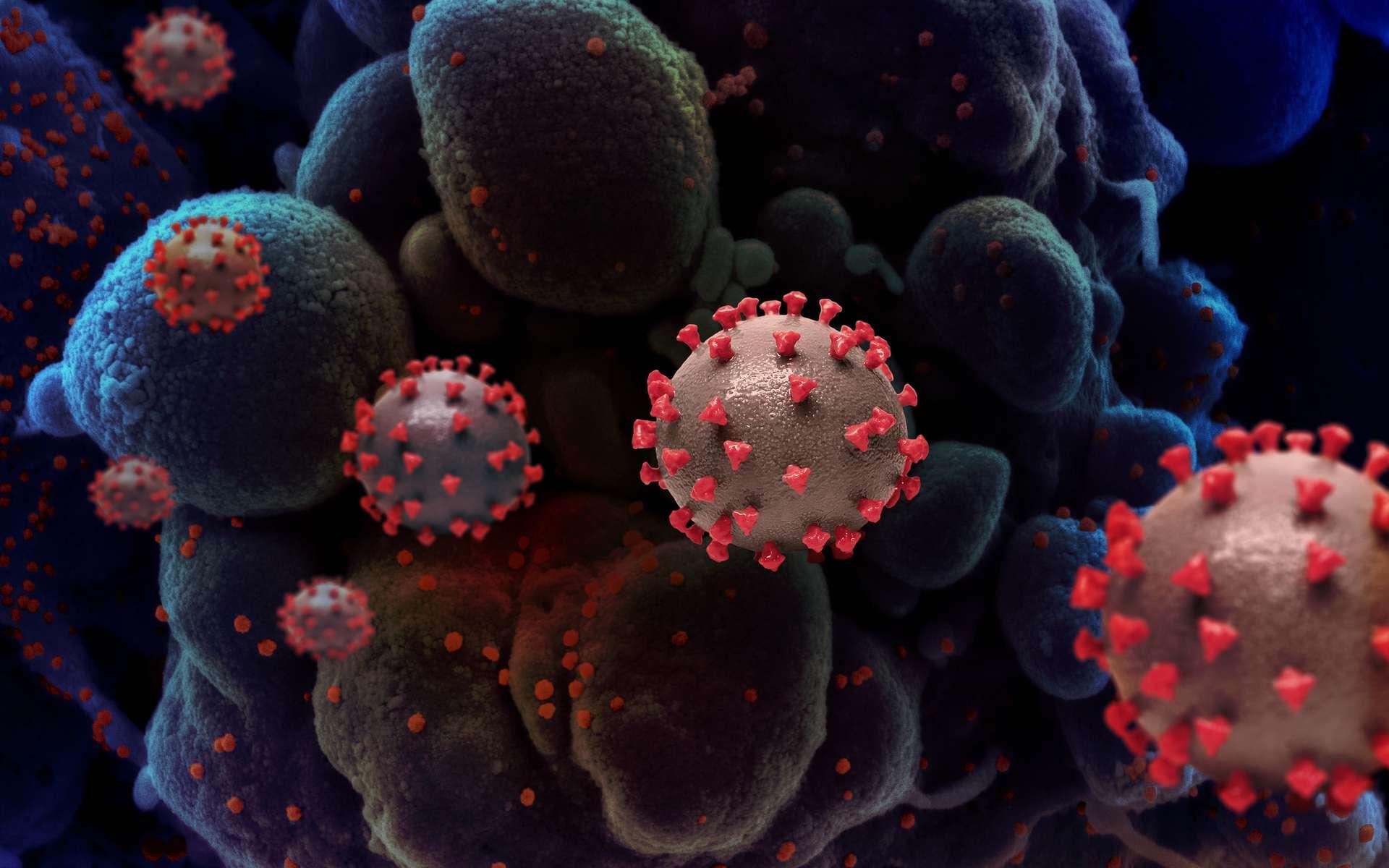 Un variant de la souche SARS-CoV-2, appelé G614D, domine la pandémie de Covid-19 en Europe et aux États-Unis. © Niaid