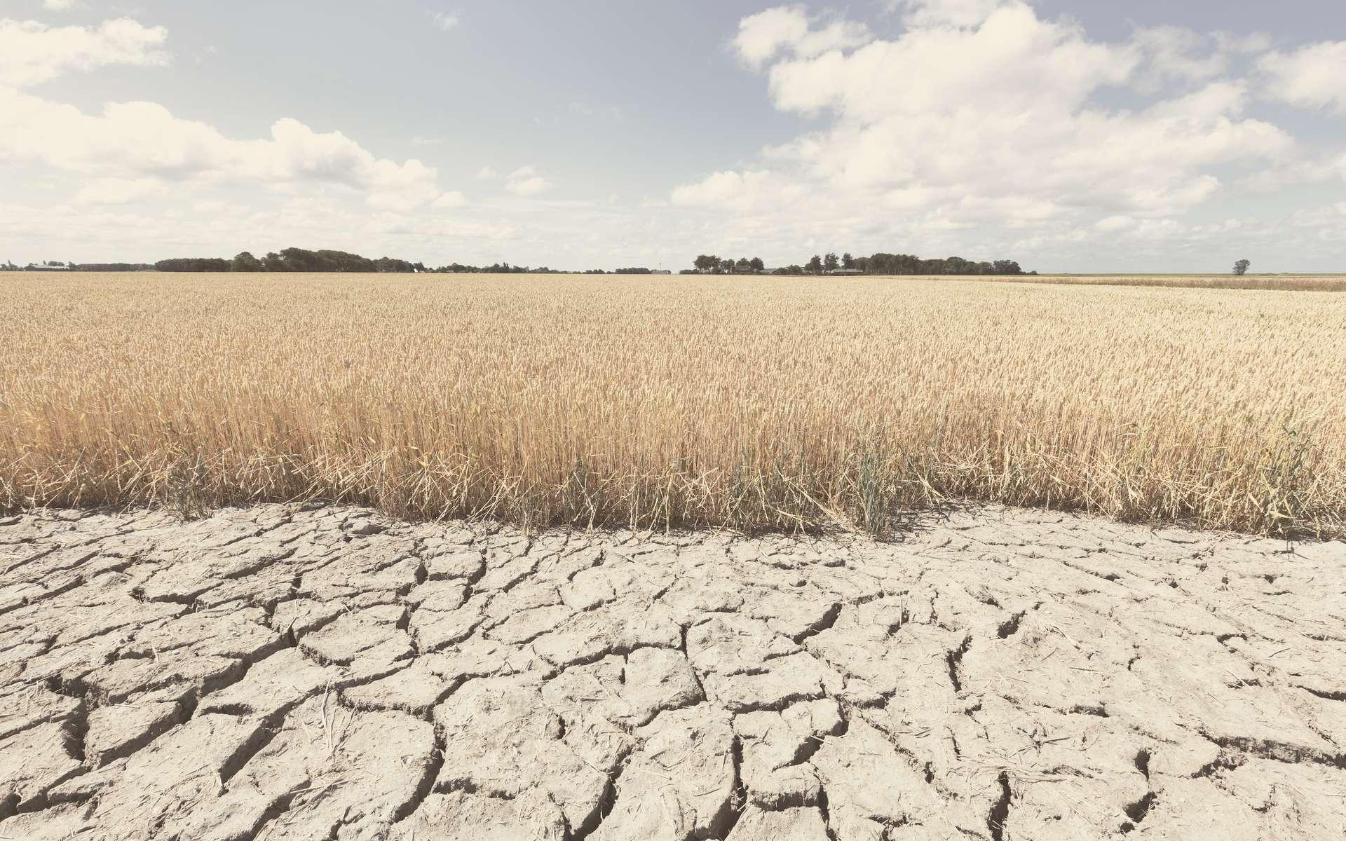 Réchauffement climatique : « c'est déjà pire que ce que j'imaginais »