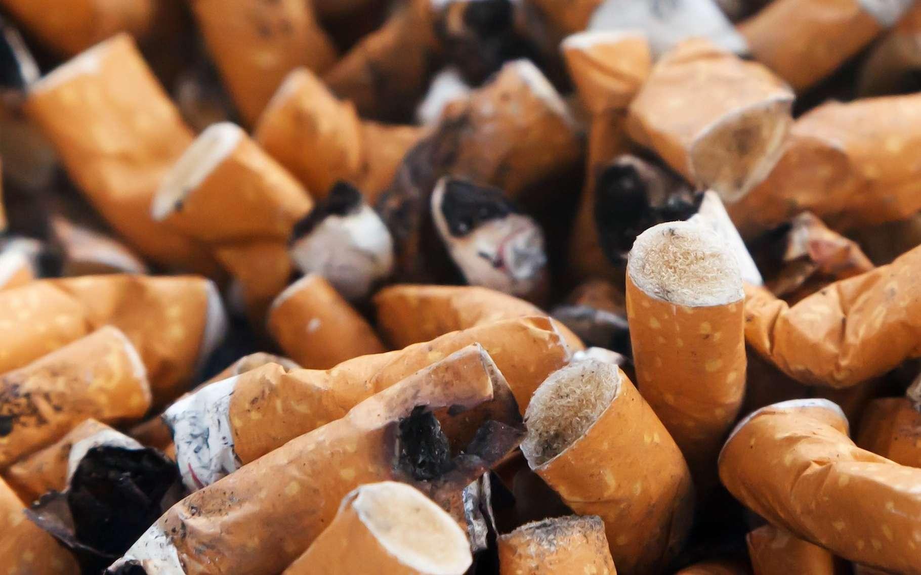 Les mégots sont des déchets particulièrement polluants. Une entreprise du Finistère semble avoir trouvé une solution pour les recycler. © PublicDomainPictures, Pixabay, CC0 Creative Commons