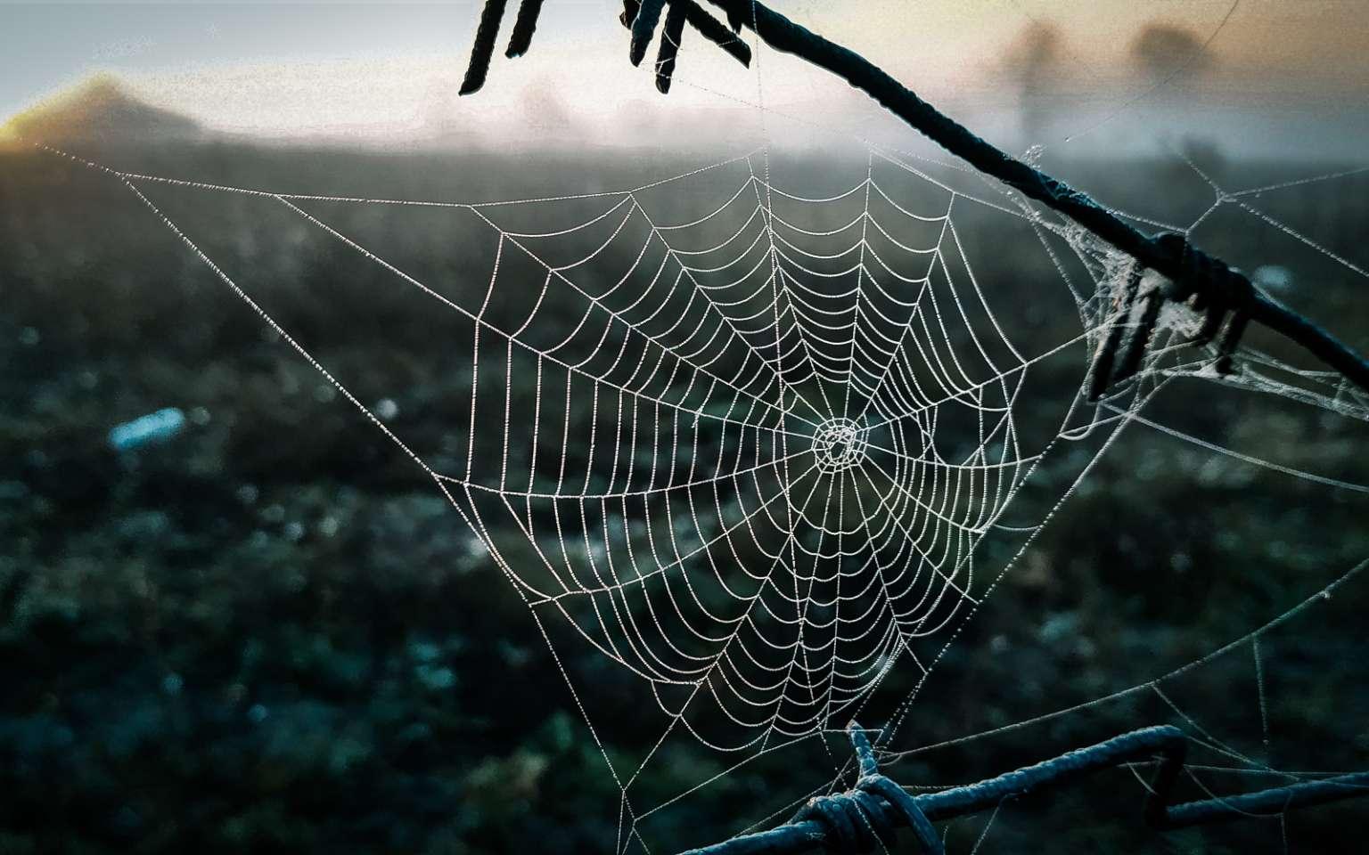 Les toiles d'araignées ont des propriétés impressionnantes. © Дима Широкий, Adobe Stock