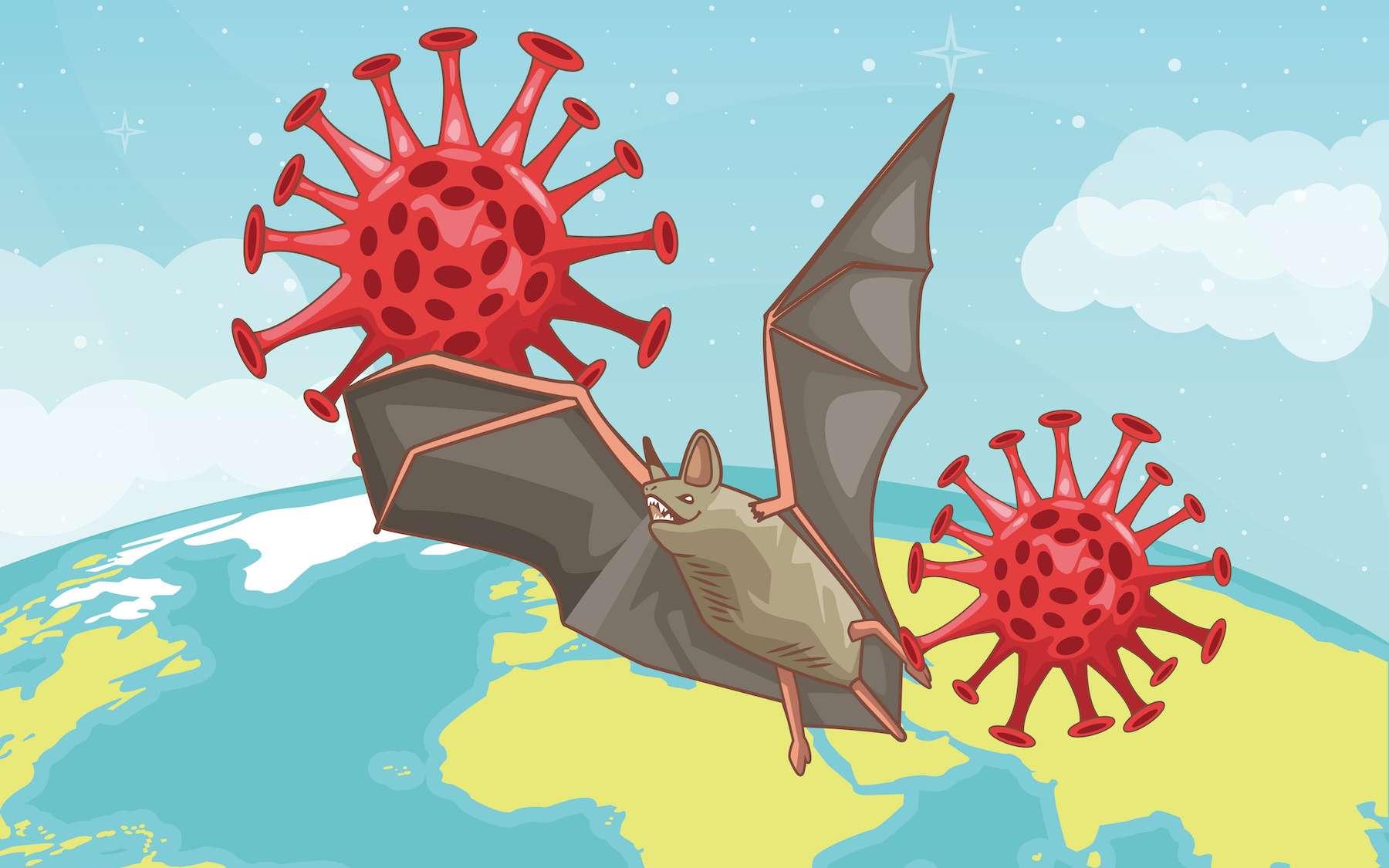 23 espèces de chauves-souris abritent des coronavirus susceptibles d'être transmis à l'Homme. © Vectorfair.com, Adobe Stock