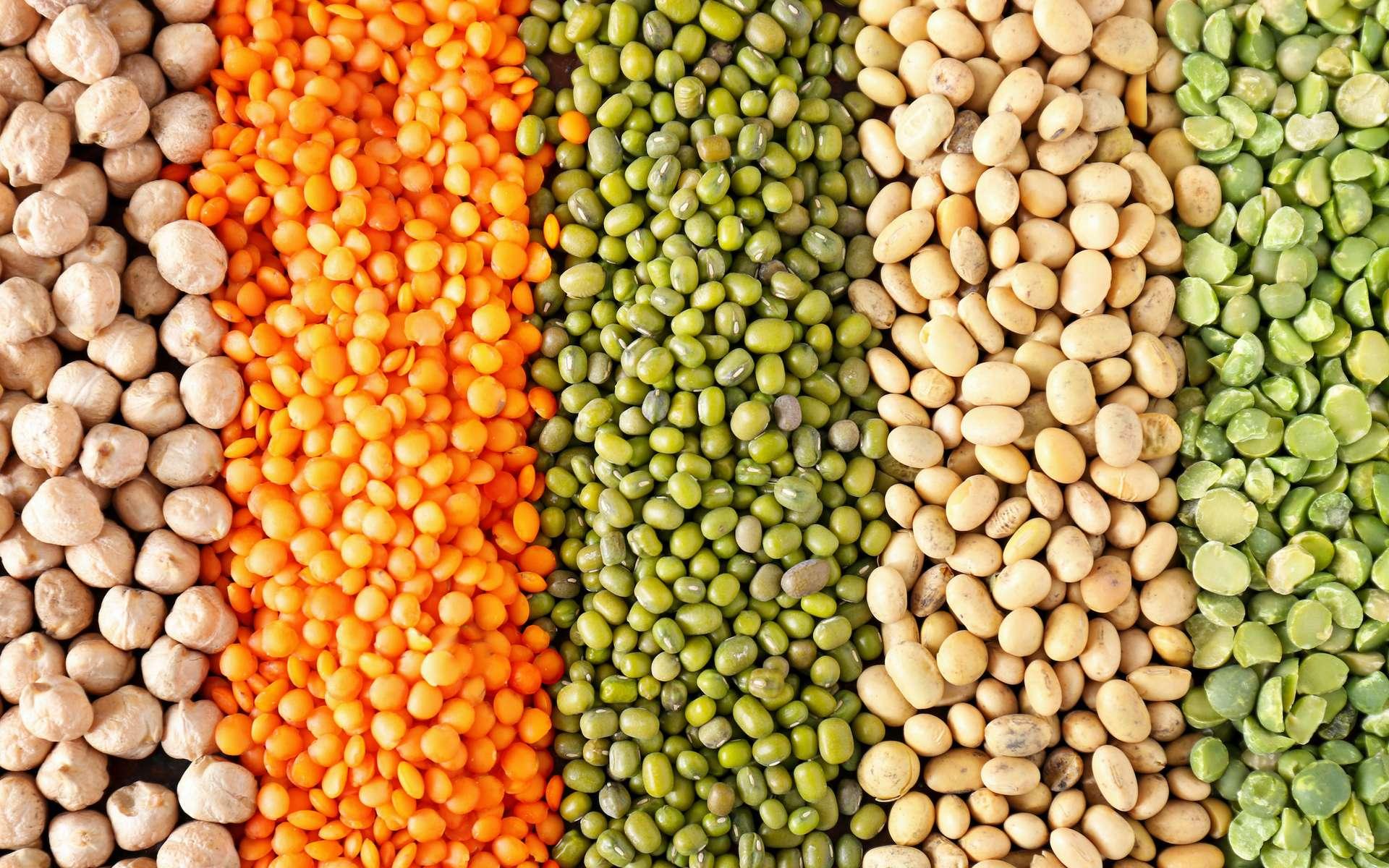 Les légumineuses sont utilisées dans l'alimentation humaine ou animale. © Pixel-Shot, Adobe Stock