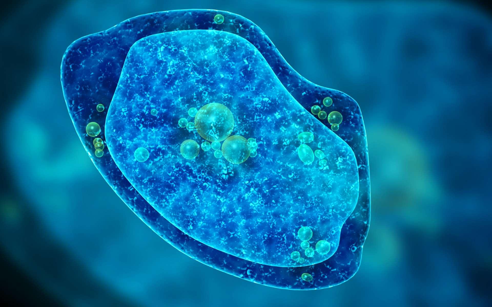 Yaravirus est un nouveau type de virus de l'amibe. © frenta, Adobe Stock
