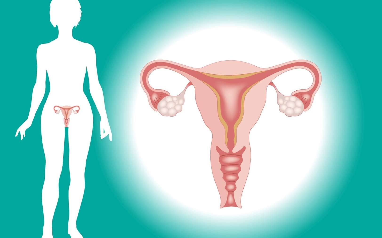 Le col de l'utérus est la partie basse et étroite de l'utérus qui permet la communication entre utérus et vagin. © vladgrin, Fotolia