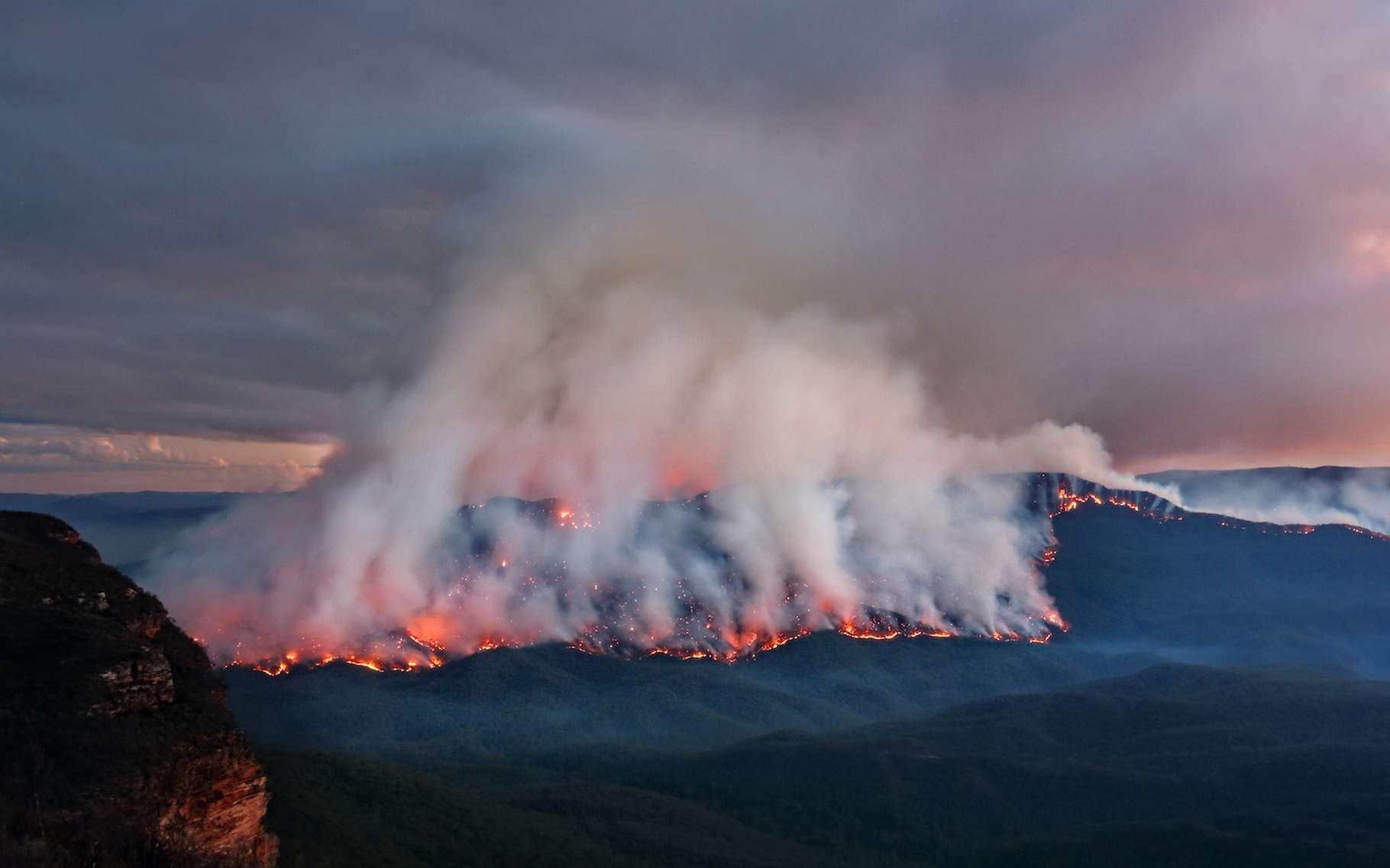 En Australie, les feux de brousse en déjà décimé quelque 10 millions d'hectares depuis le mois de septembre dernier. Et au fil des semaines, la liste des conséquences s'allonge inexorablement. © Leah-Anne Thompson, Adobe Stock