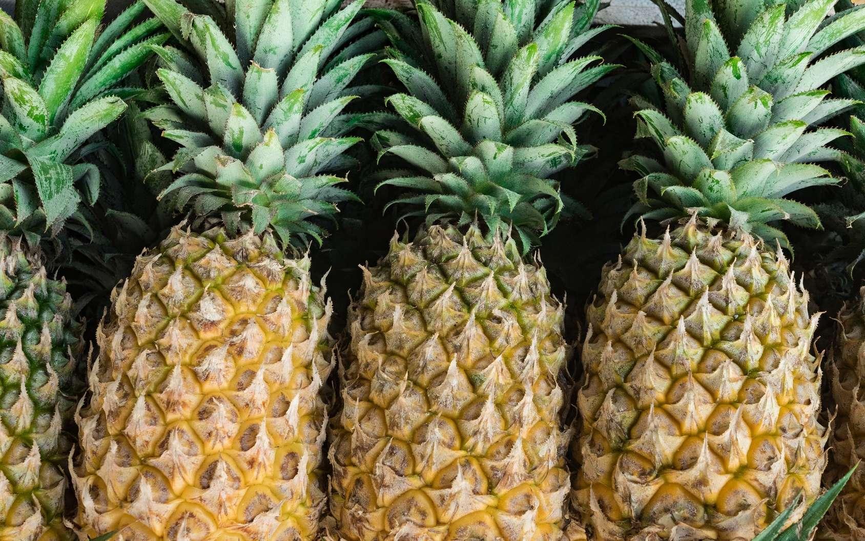 La bromélaïne est extraite de l'ananas. © rhzr, Fotolia